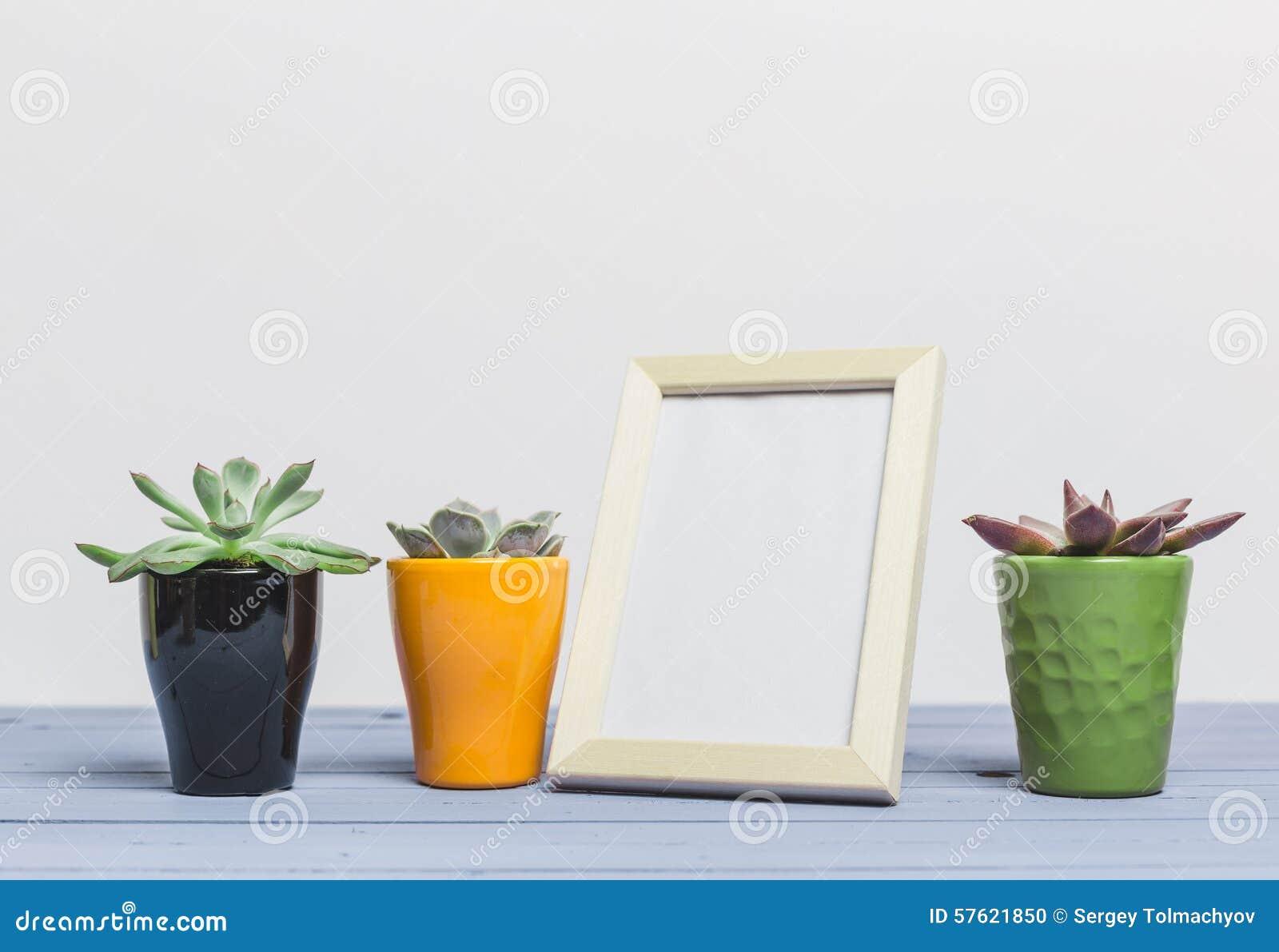 House Plants Succulents Stock Photo Image 57621850