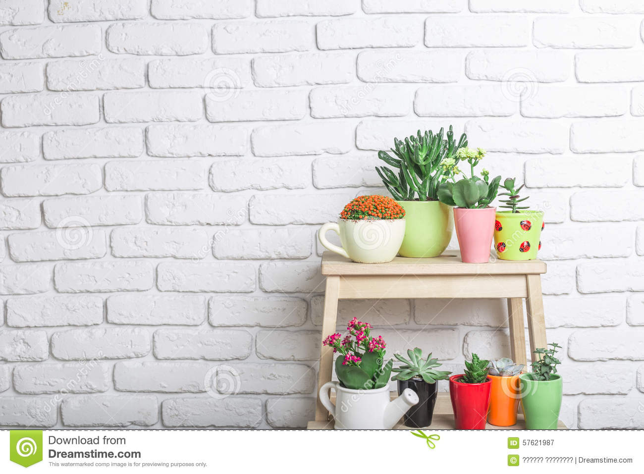 House plants succulents stock photo image 57621987 - Colorful indoor plants ...
