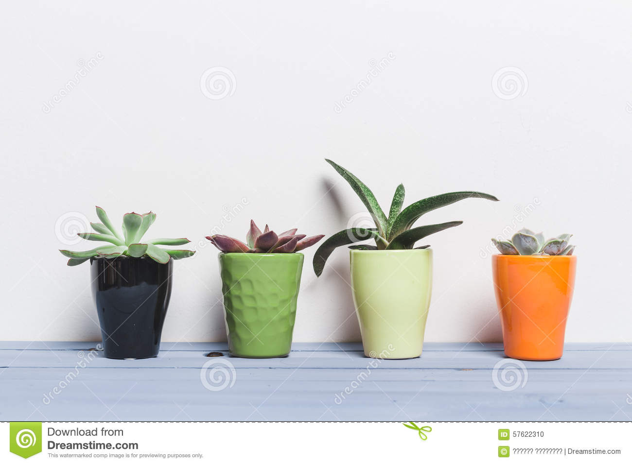House plants succulents stock photo image 57622310 - Colorful indoor plants ...