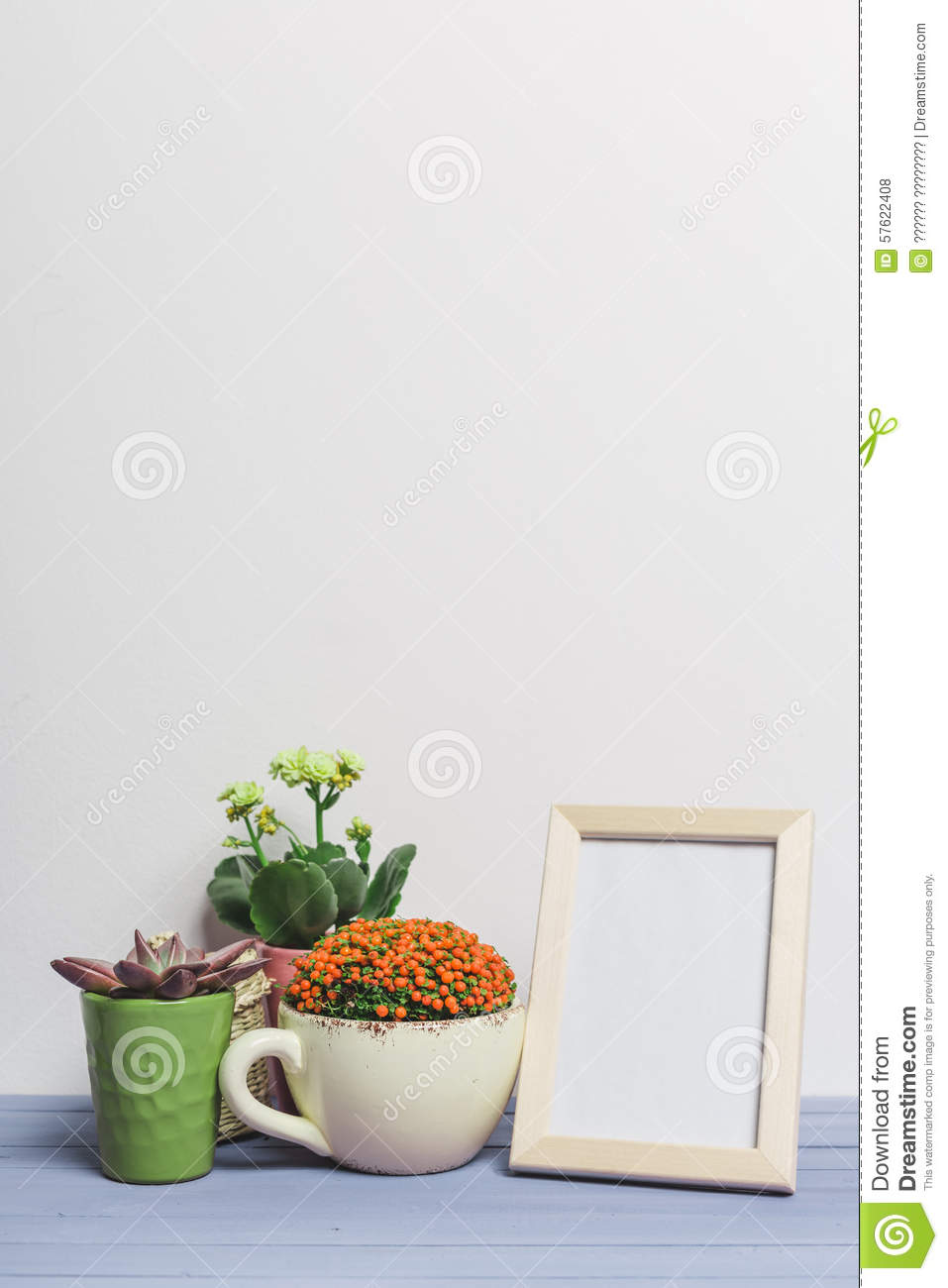 House plants succulents stock photo image 57622408 - Colorful indoor plants ...