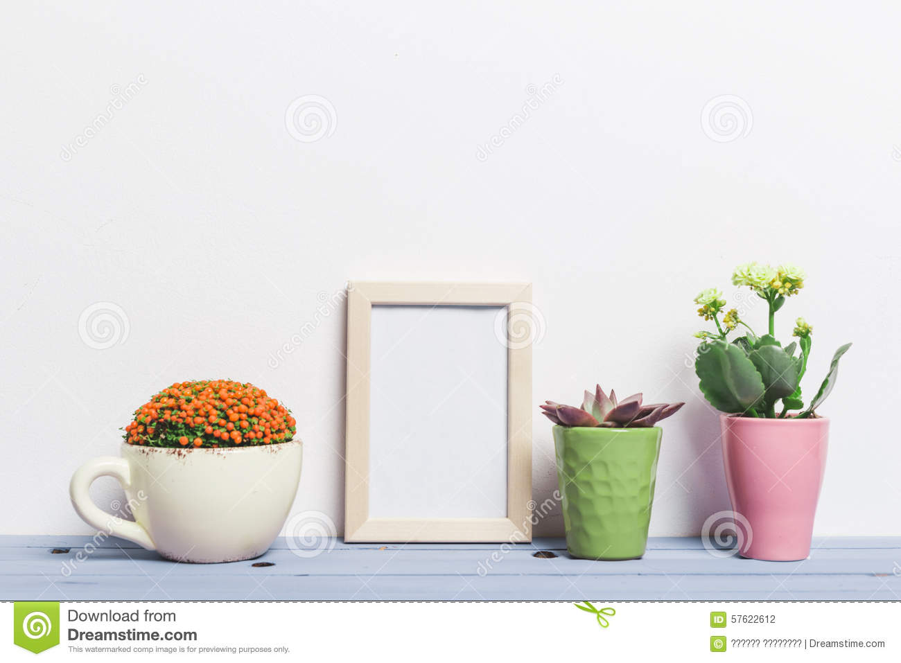 House plants succulents stock photo image 57622612 - Colorful indoor plants ...