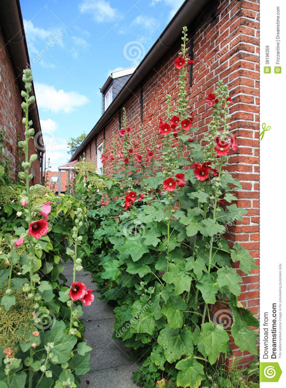 House Of Red Brick Stones With Red Farmers Roses In The
