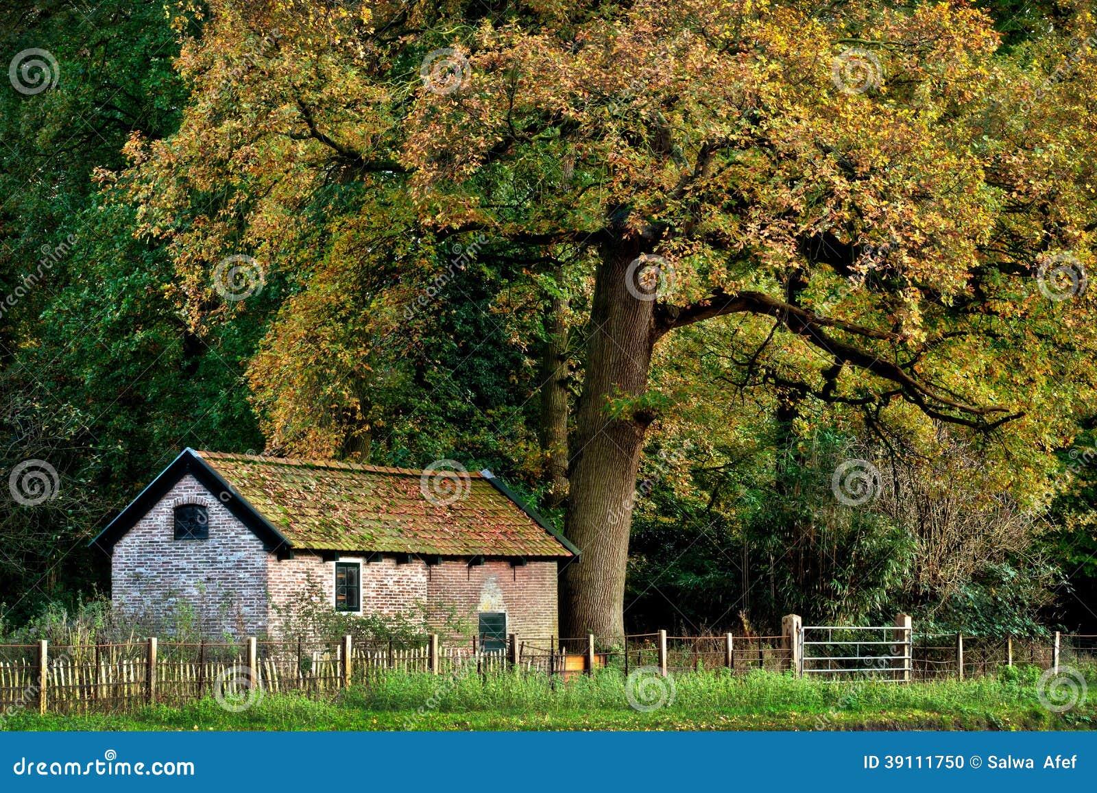 House Under A Big Tree