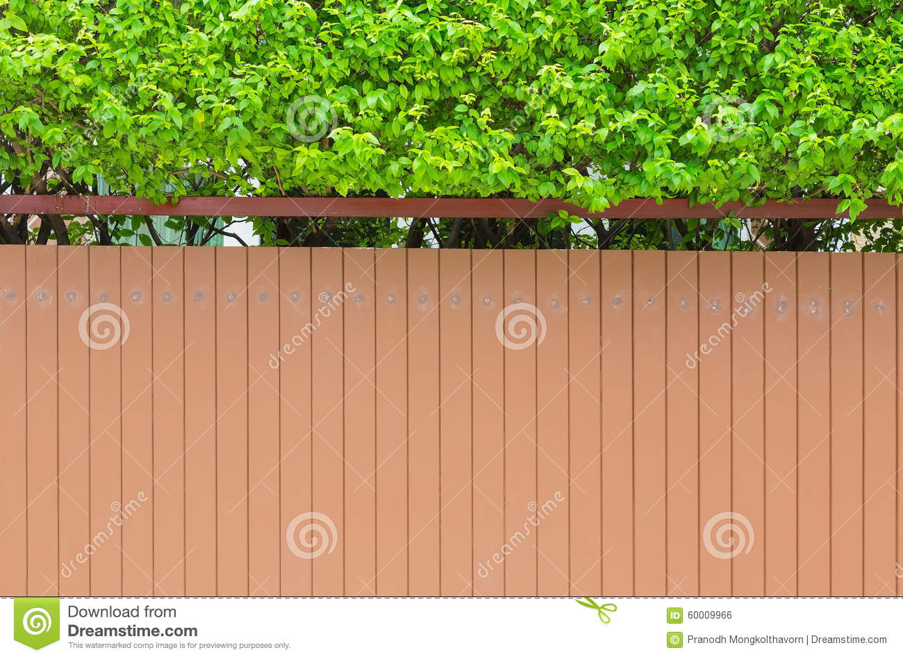 Wall of house and small garden stock photo cartoondealer for Small green outdoor plants