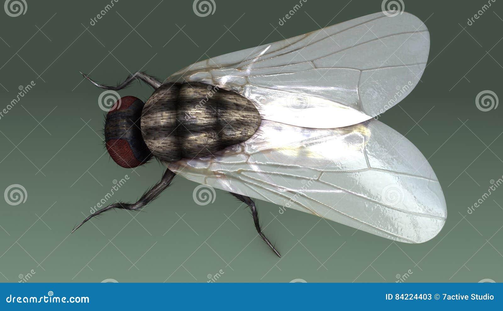 Housefly stock illustration. Illustration of closeup - 84224403