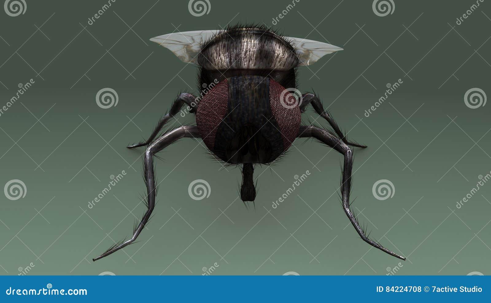 Housefly stock illustration. Illustration of black, hairy - 84224708