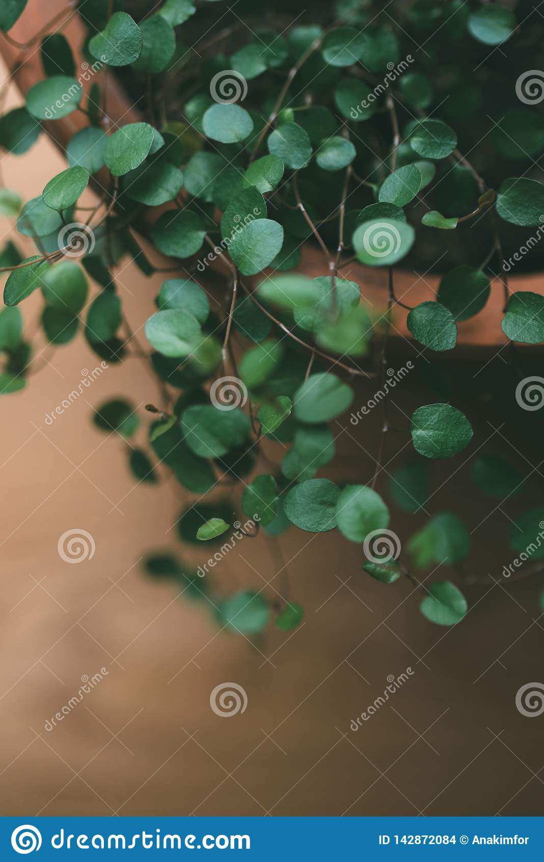 Houseplant em um potenciômetro na janela