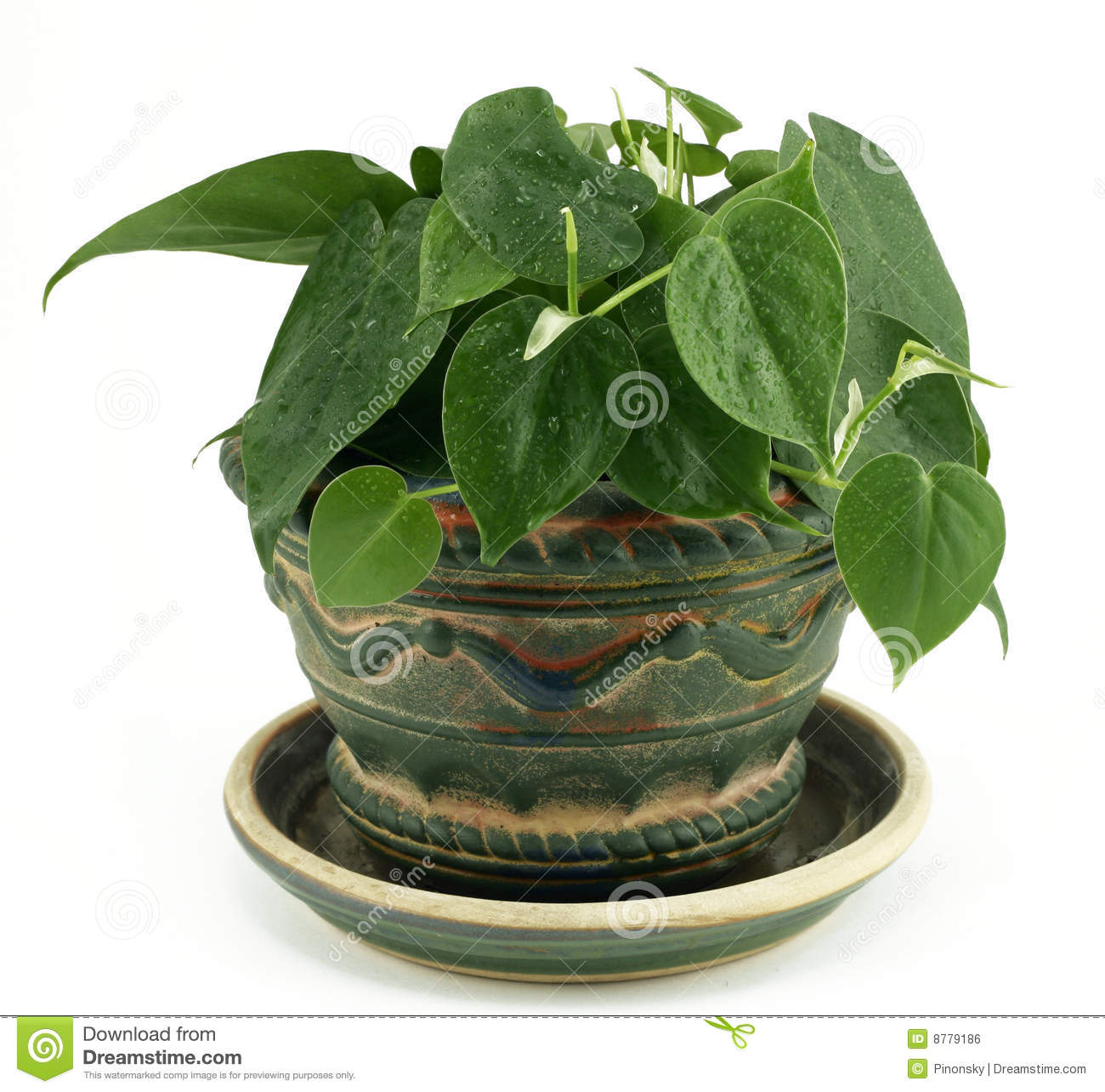 Houseplant Potted del Philodendron en blanco
