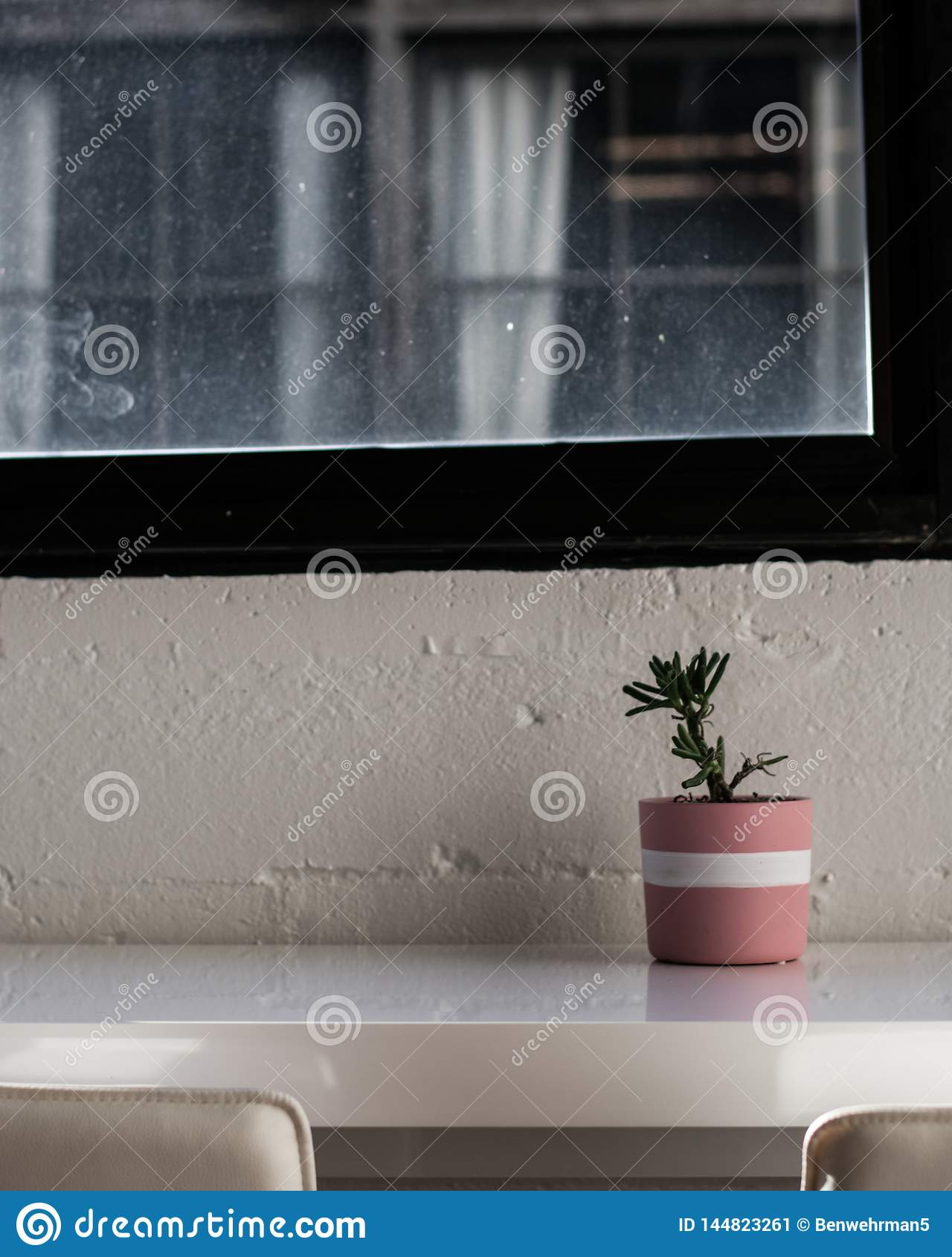 Houseplant on the table
