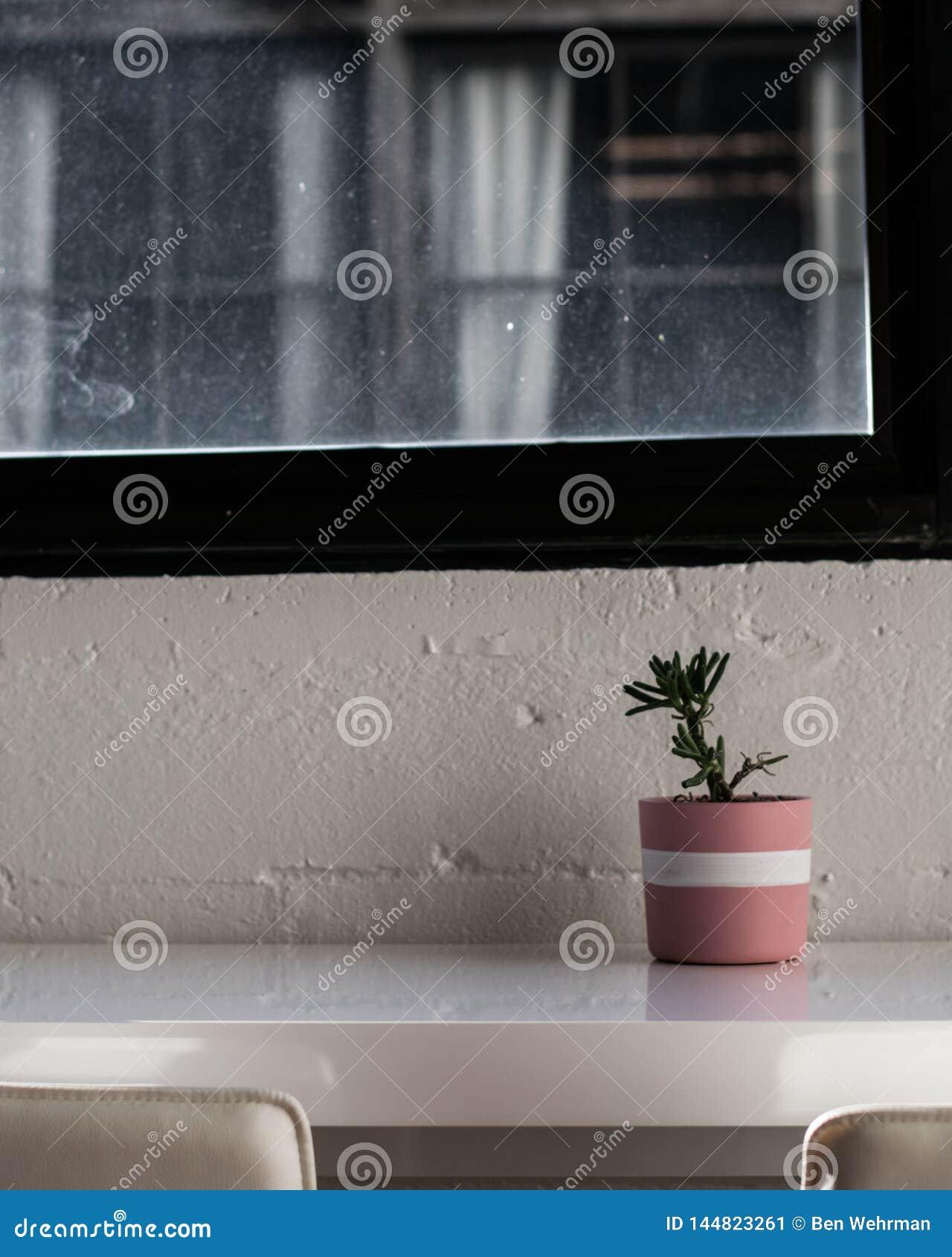 Houseplant στον πίνακα