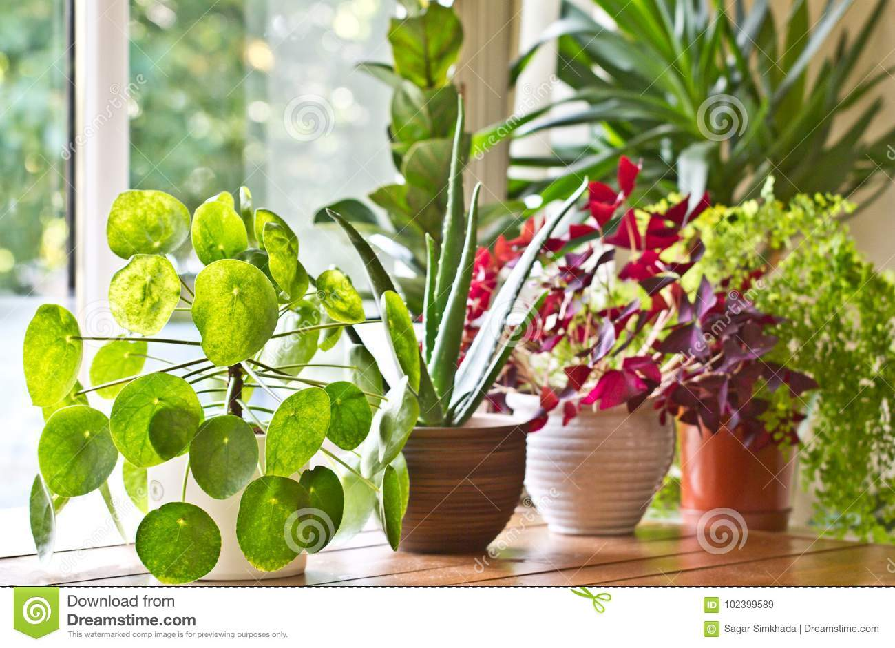 Houseplants display. House plants or indoor plants