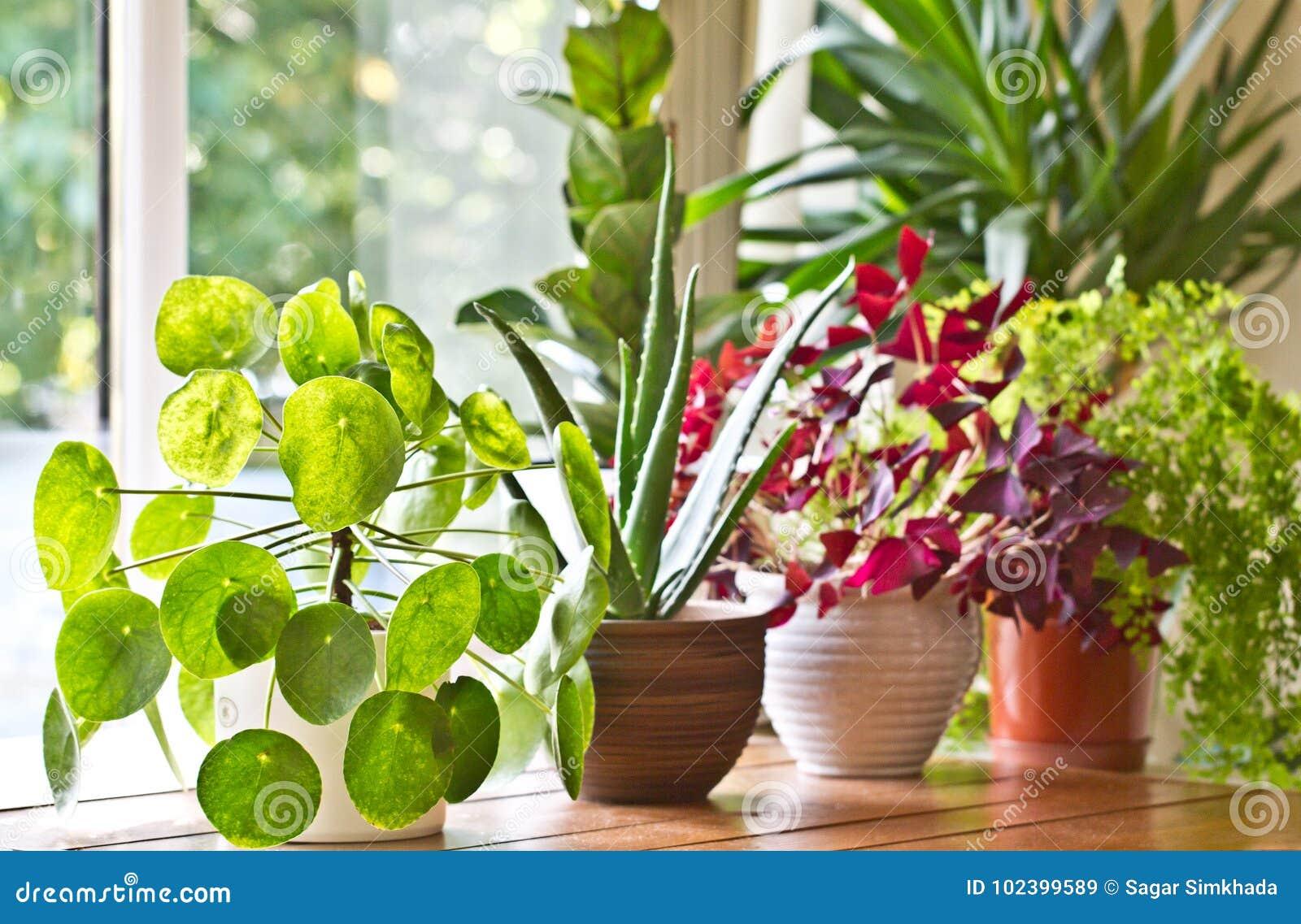 Houseplantsskärm Husväxter eller inomhus växter