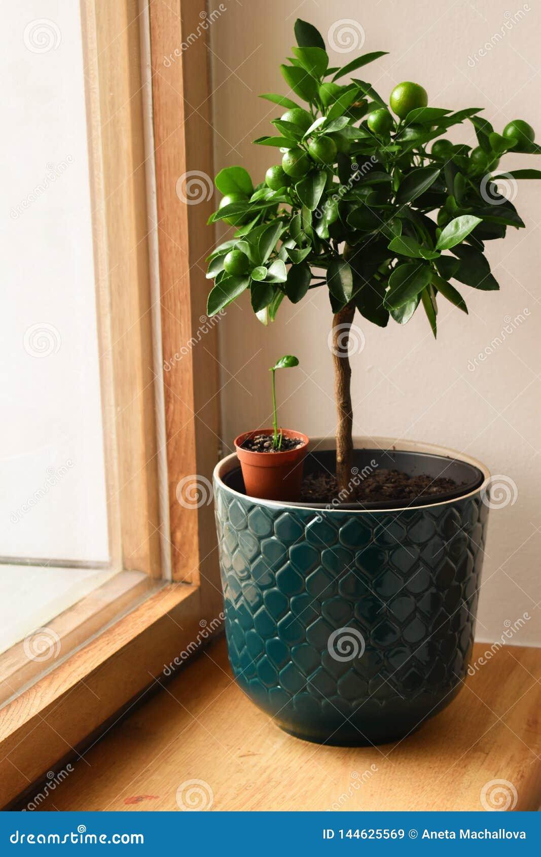Houseplantsskärm Olika husväxter eller inomhus växter Kök som arbeta i trädgården