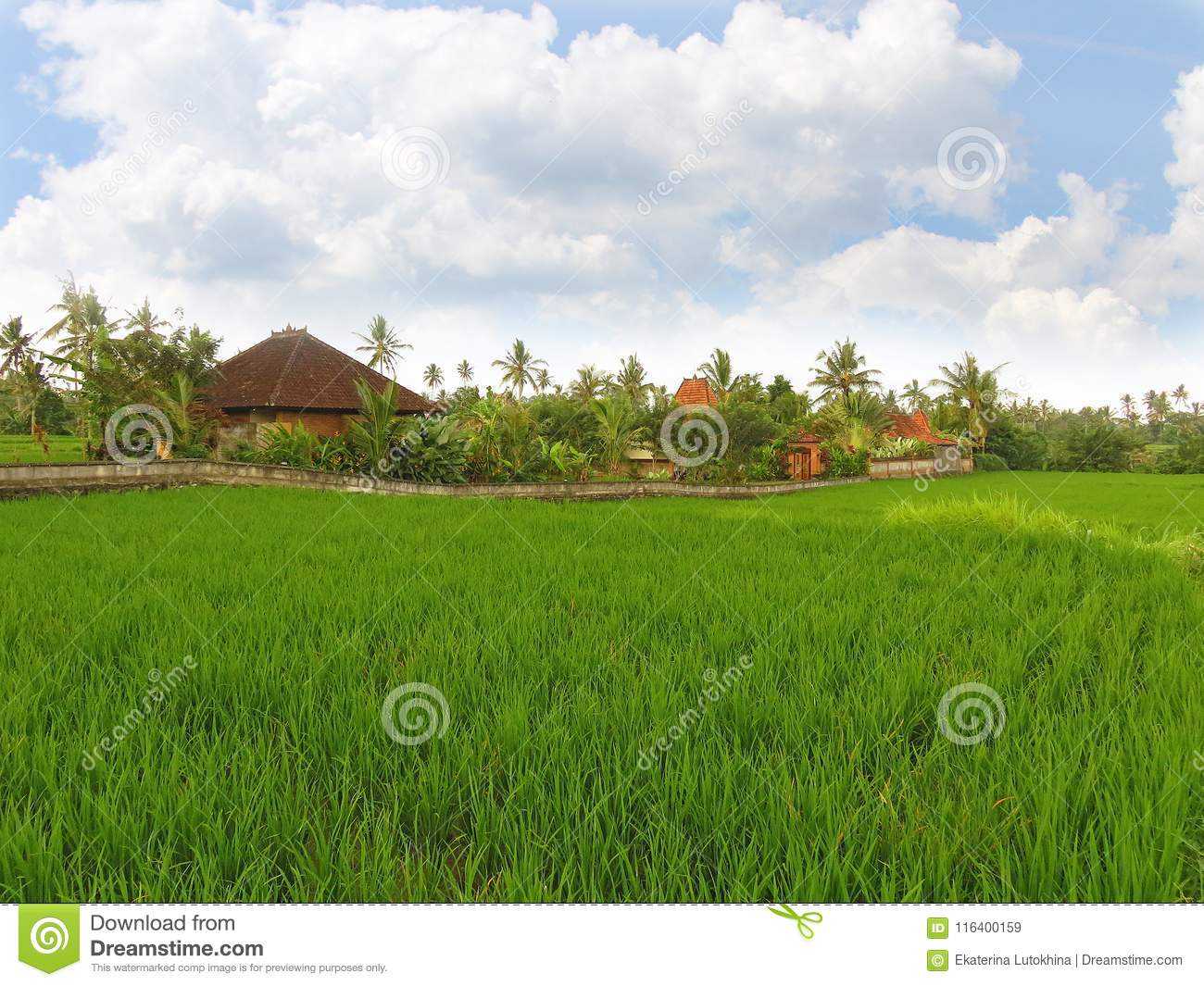 Houses and rice fields in Ubud, Bali