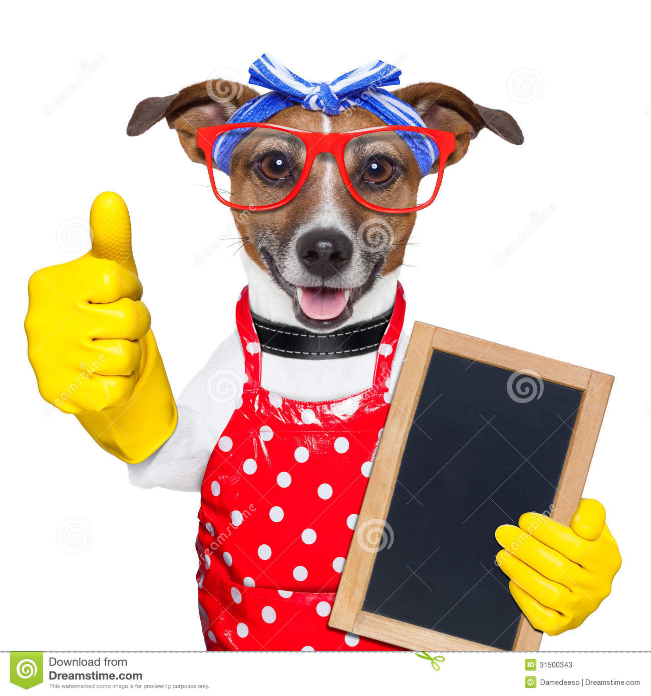Housewife dog with rubber gloves and thumb up.