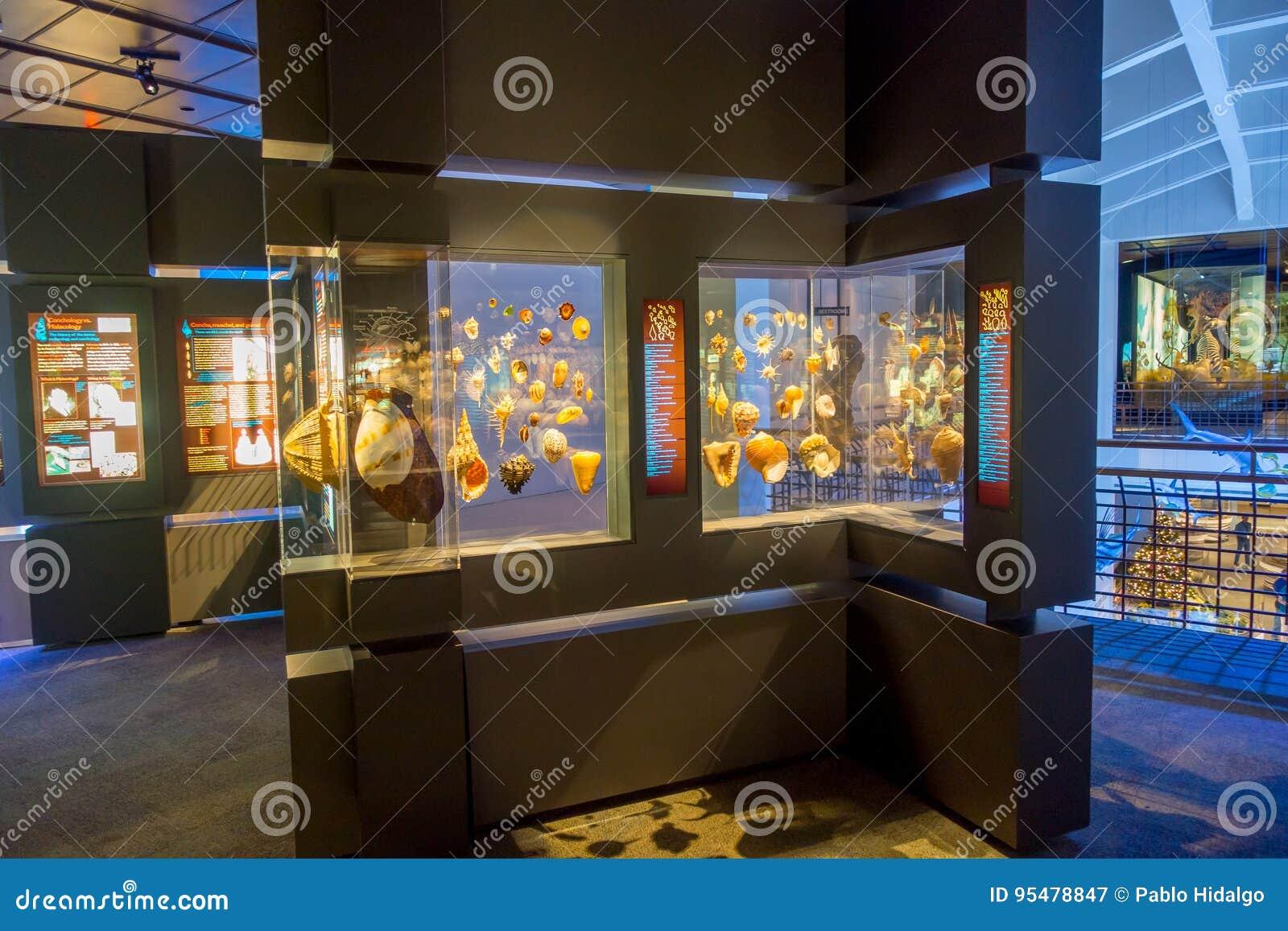 HOUSTON, usa - STYCZEŃ 12, 2017: Seashell ekspozycja wśrodku muzeum narodowego Naturalna nauka w Orlando,