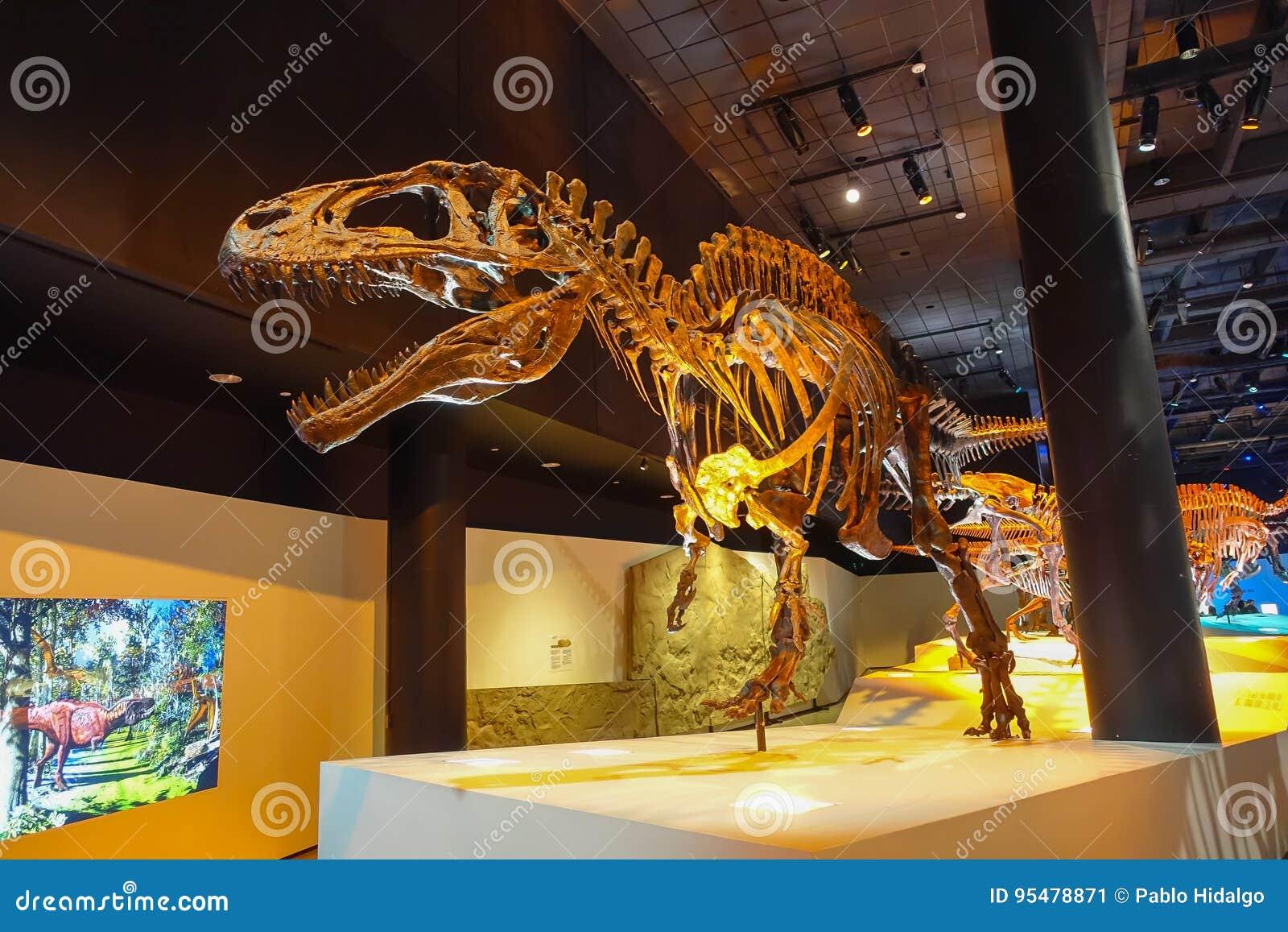 HOUSTON, usa - STYCZEŃ 12, 2017: Skamielina dinosaura t-rex zadziwiający dinosaura depredator ten wiek w a,