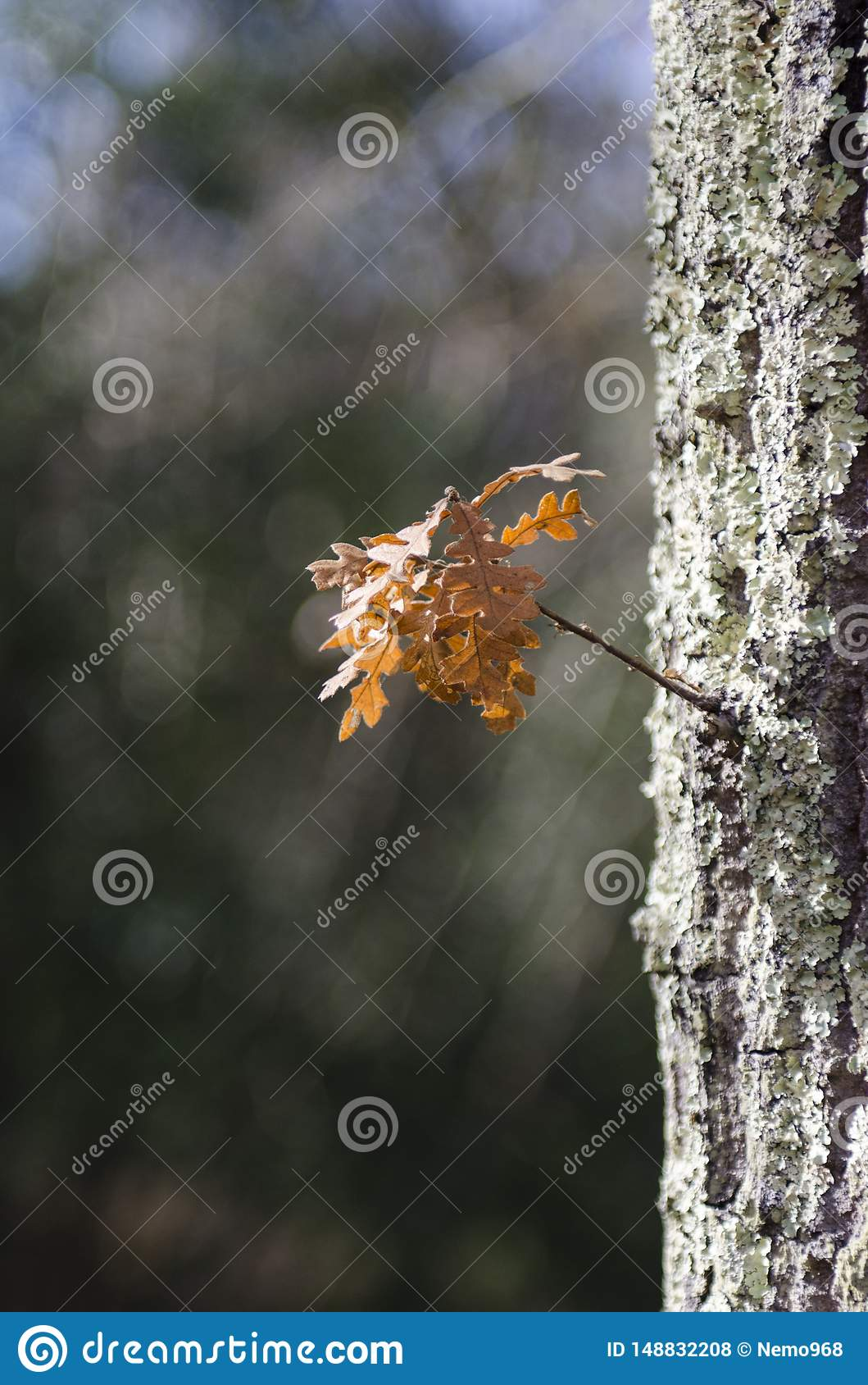 Hout in de herfst na de regen