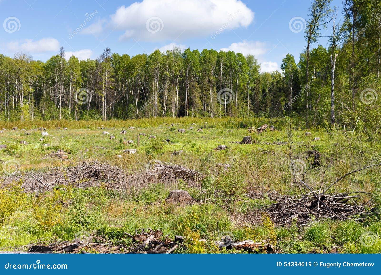 Hout die stomp na ontbossingshout registreren