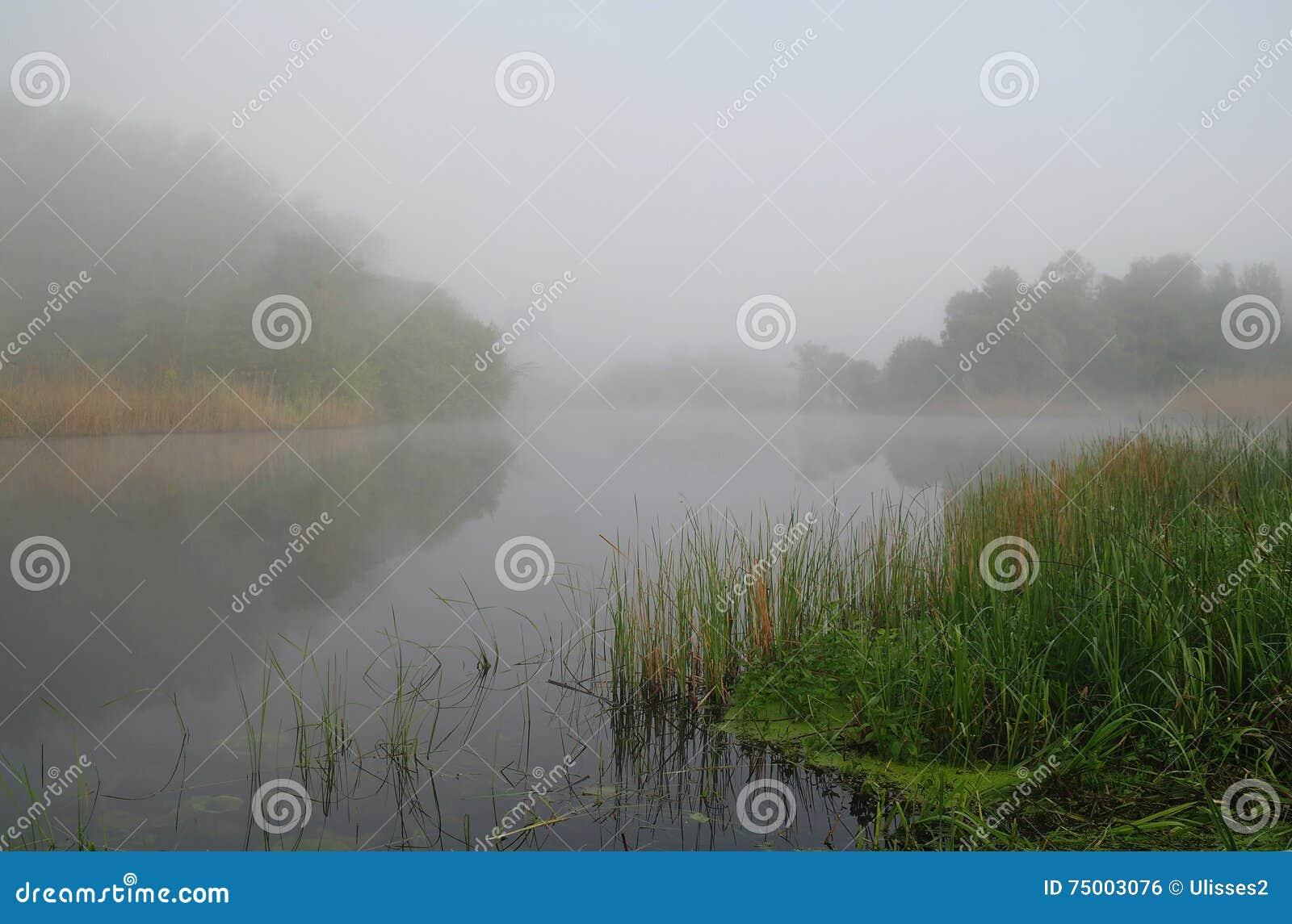 Hout op kust van de rivier, ochtend