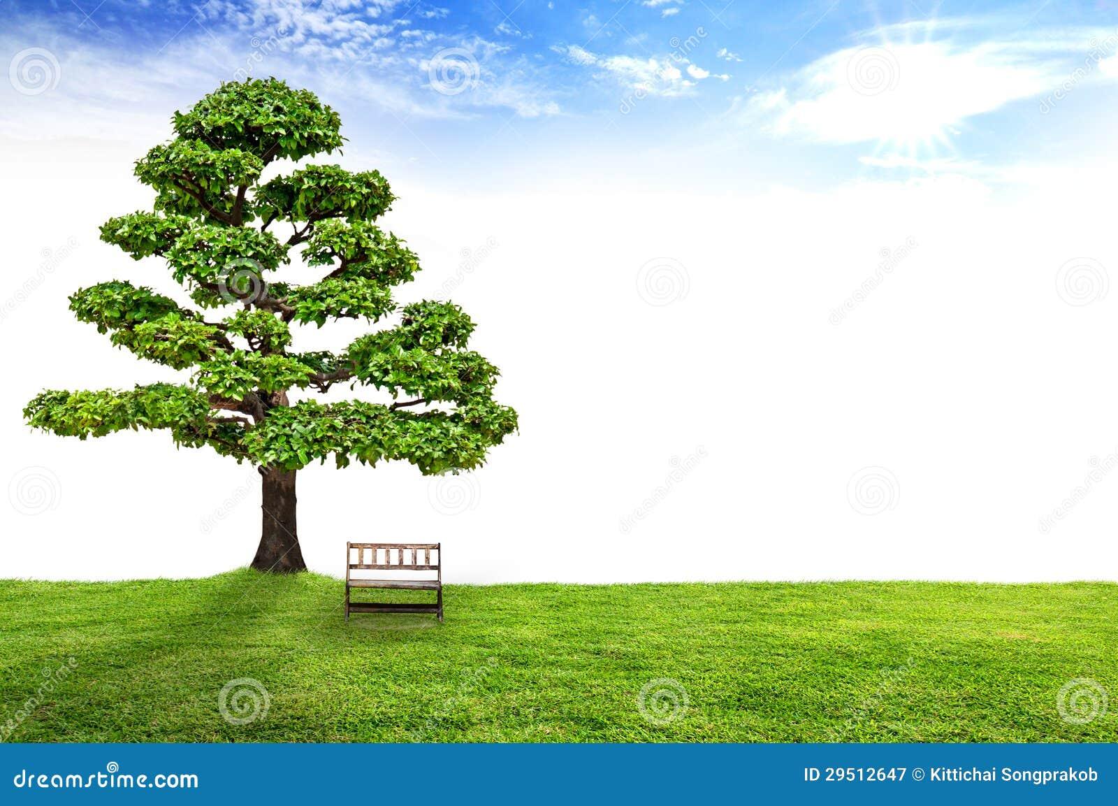 Houten bank onder een boom