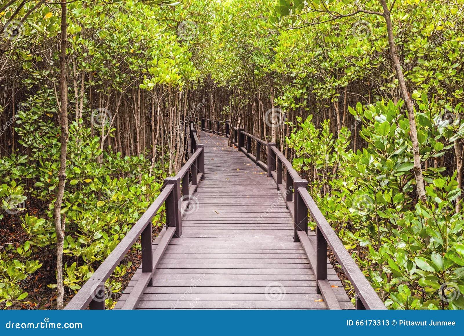 Houten brug de bosmangrove in Petchaburi, Thailand