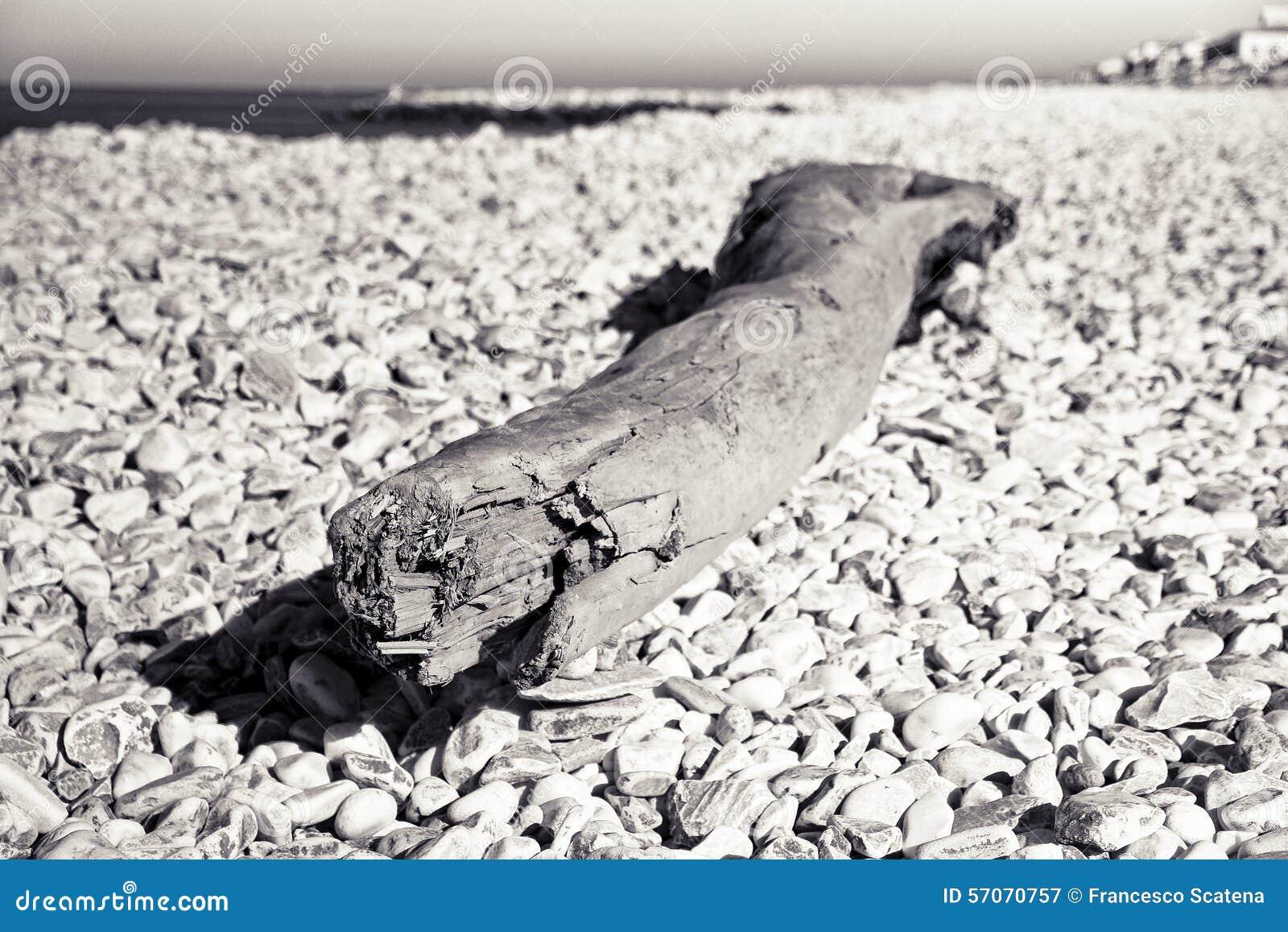 Houten die boomstam op een wit stenenstrand wordt verlaten