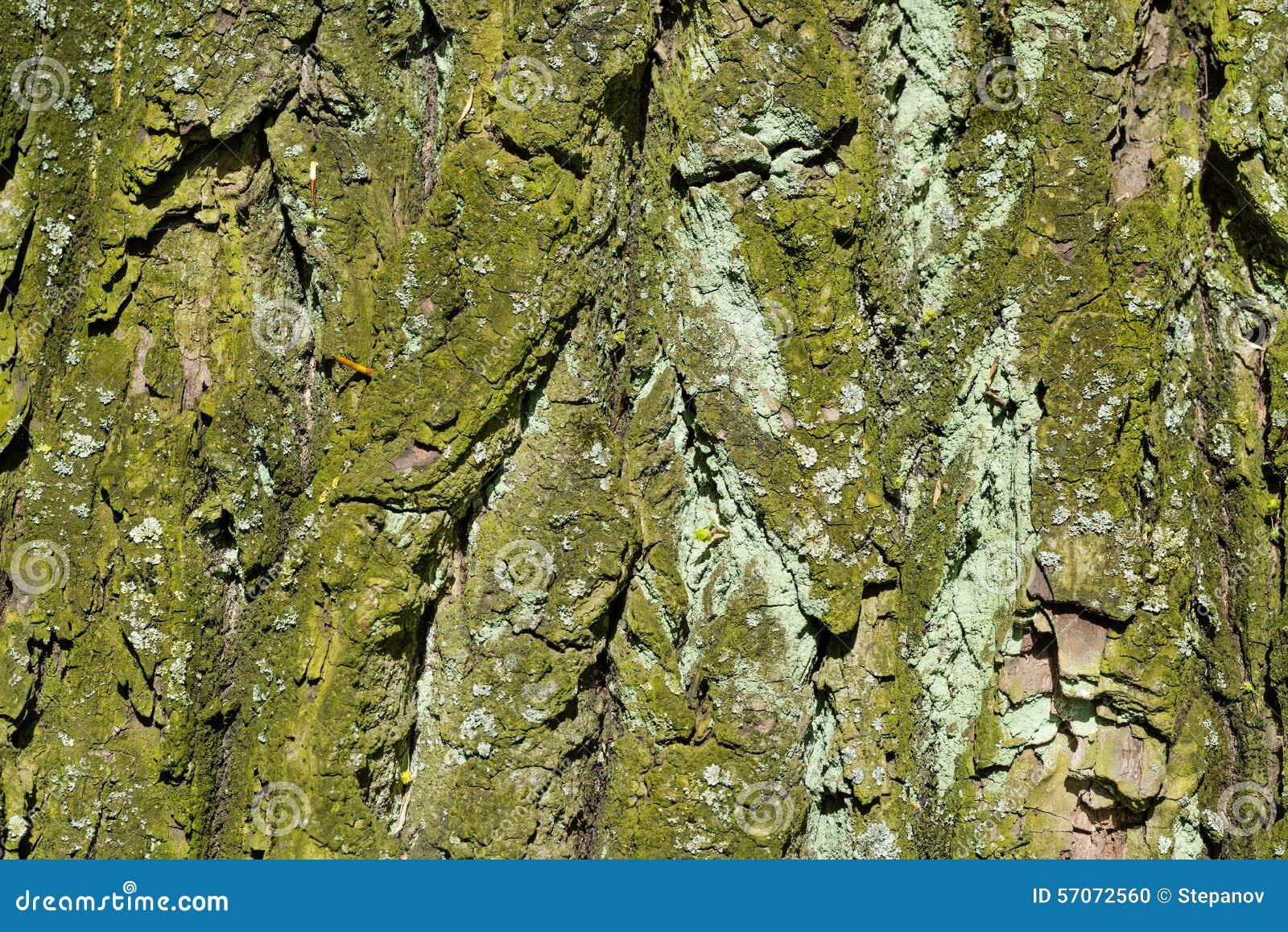 Houten geweven met groen mos