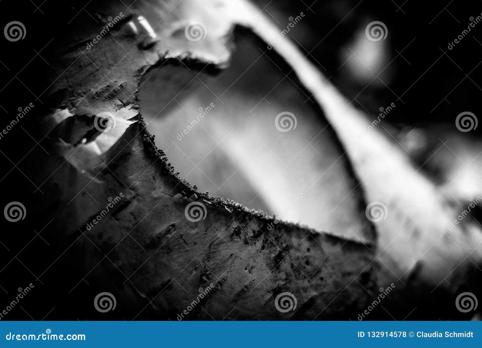 Houten liefde die in een berk wordt gesneden