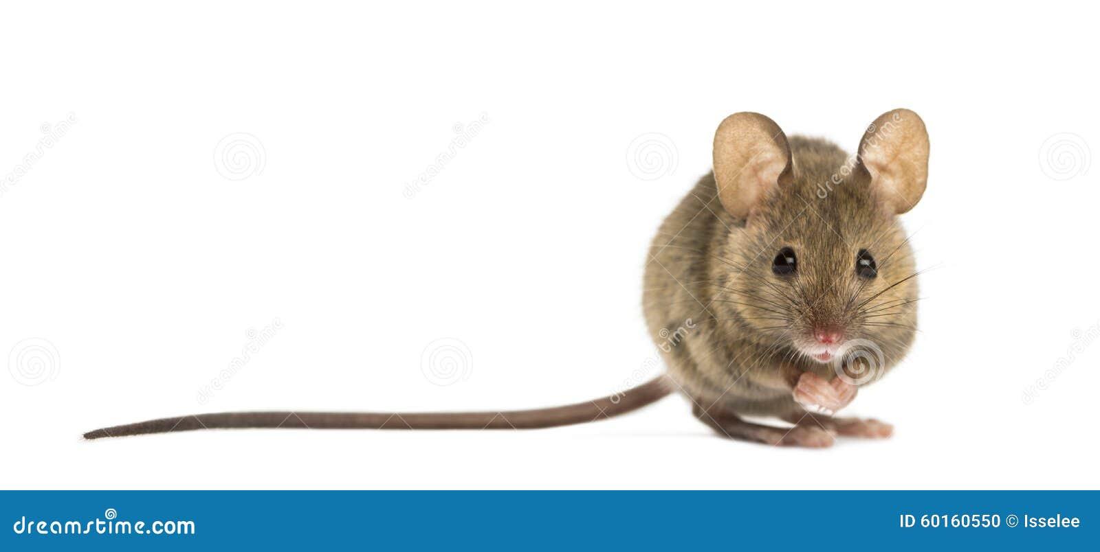 Houten muis