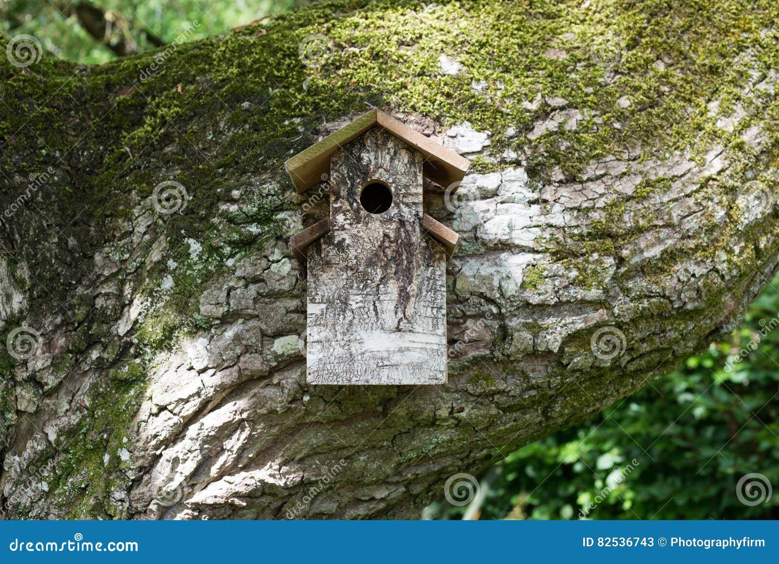 Houten vogelhuis op reusachtige mos behandelde tak