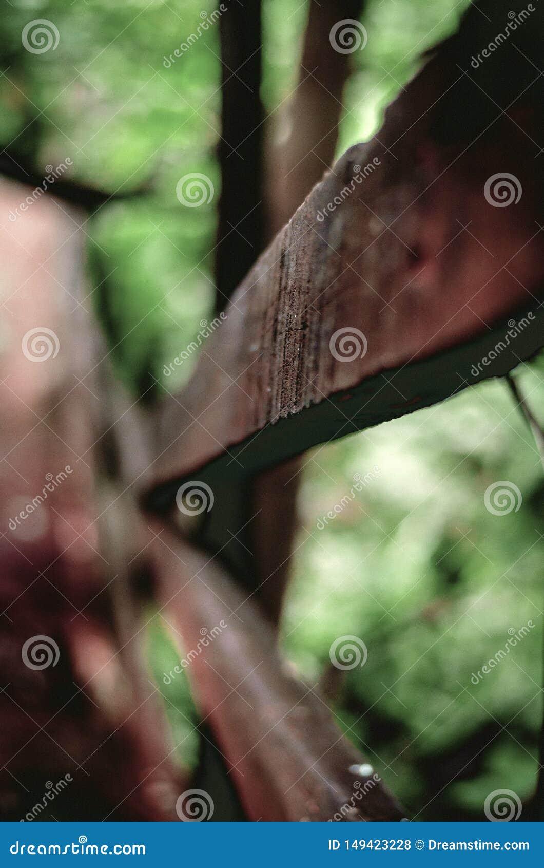 Houten zijhandvat op stappen - onderaan een bosweg