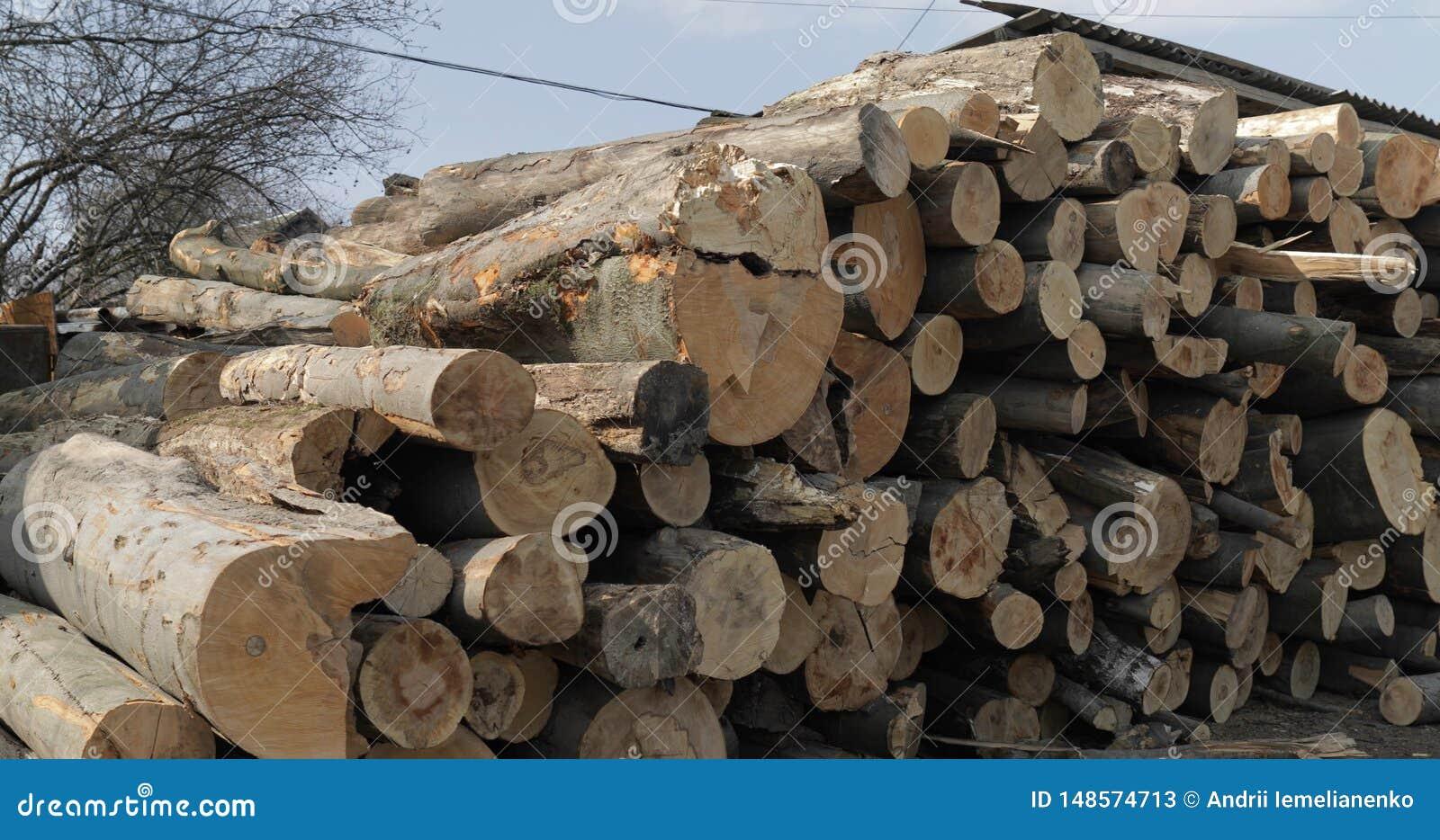 Houtregistreren Snijd omhoog opgestapelde boom vers houten logboeken Houten opslag voor de industrie