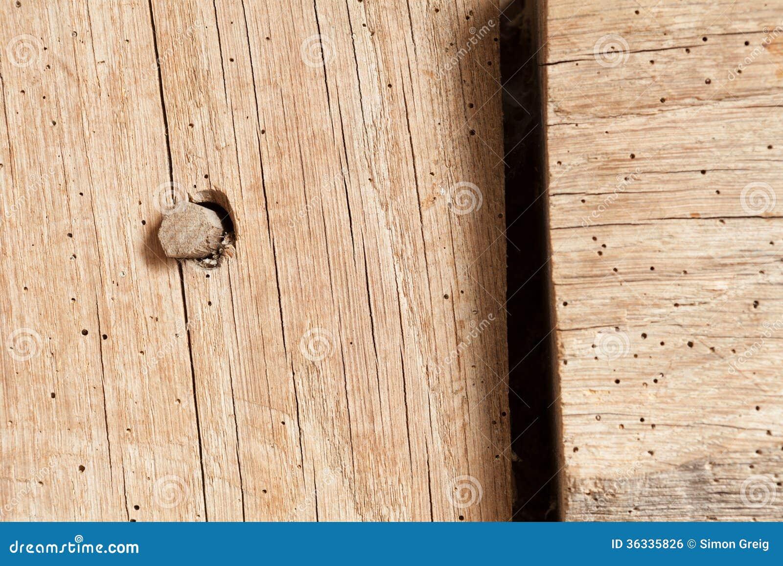 Houtworm In Eiken Straal Royalty vrije Stock Afbeelding   Beeld  36335826