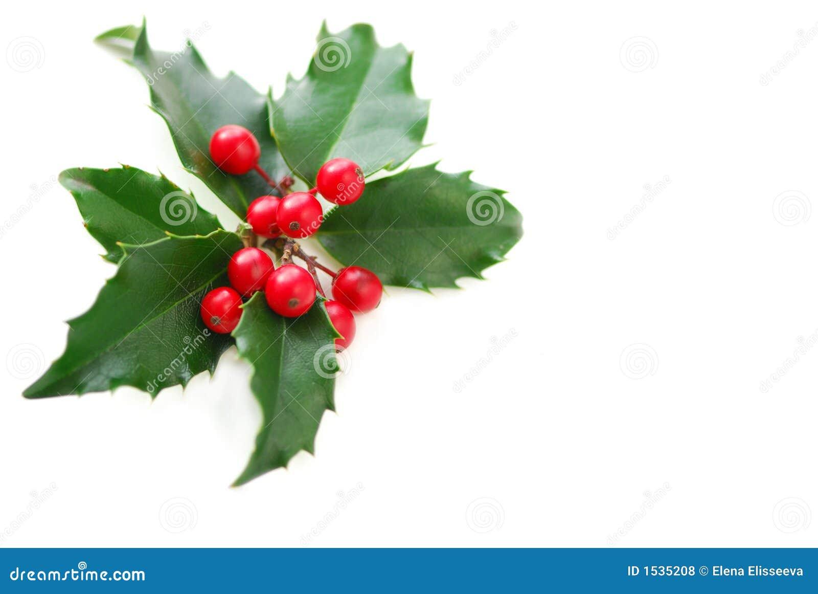 Houx de no l photo stock image du houx baie baies tradition 1535208 - Decoration de noel avec du houx ...