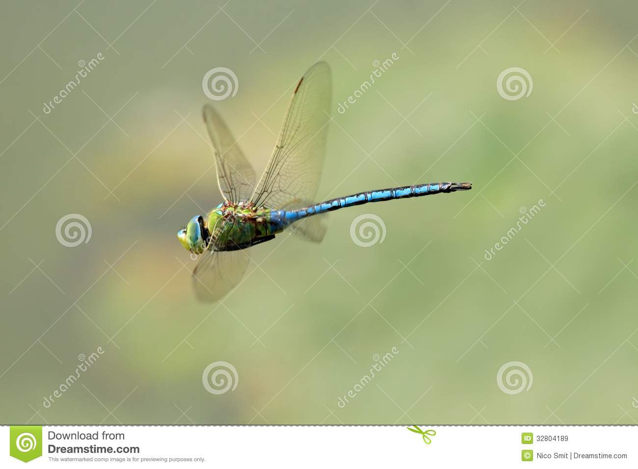 Hovering dragonfly