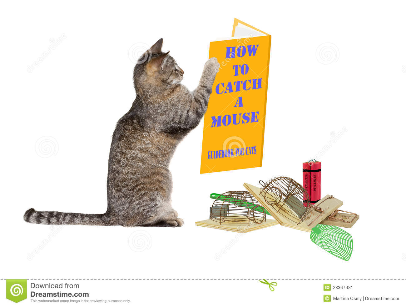 how to catch a mouse stock image image of rodent ideas 28367431. Black Bedroom Furniture Sets. Home Design Ideas