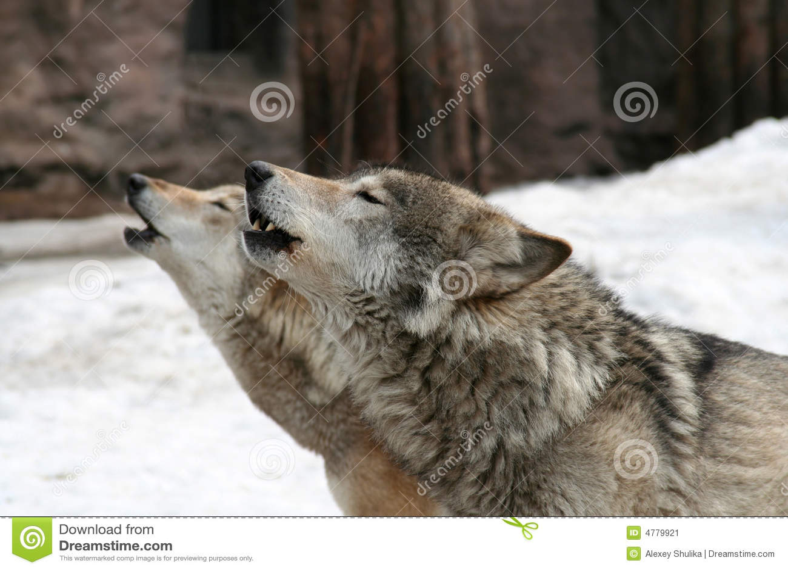 Howl dos lobos