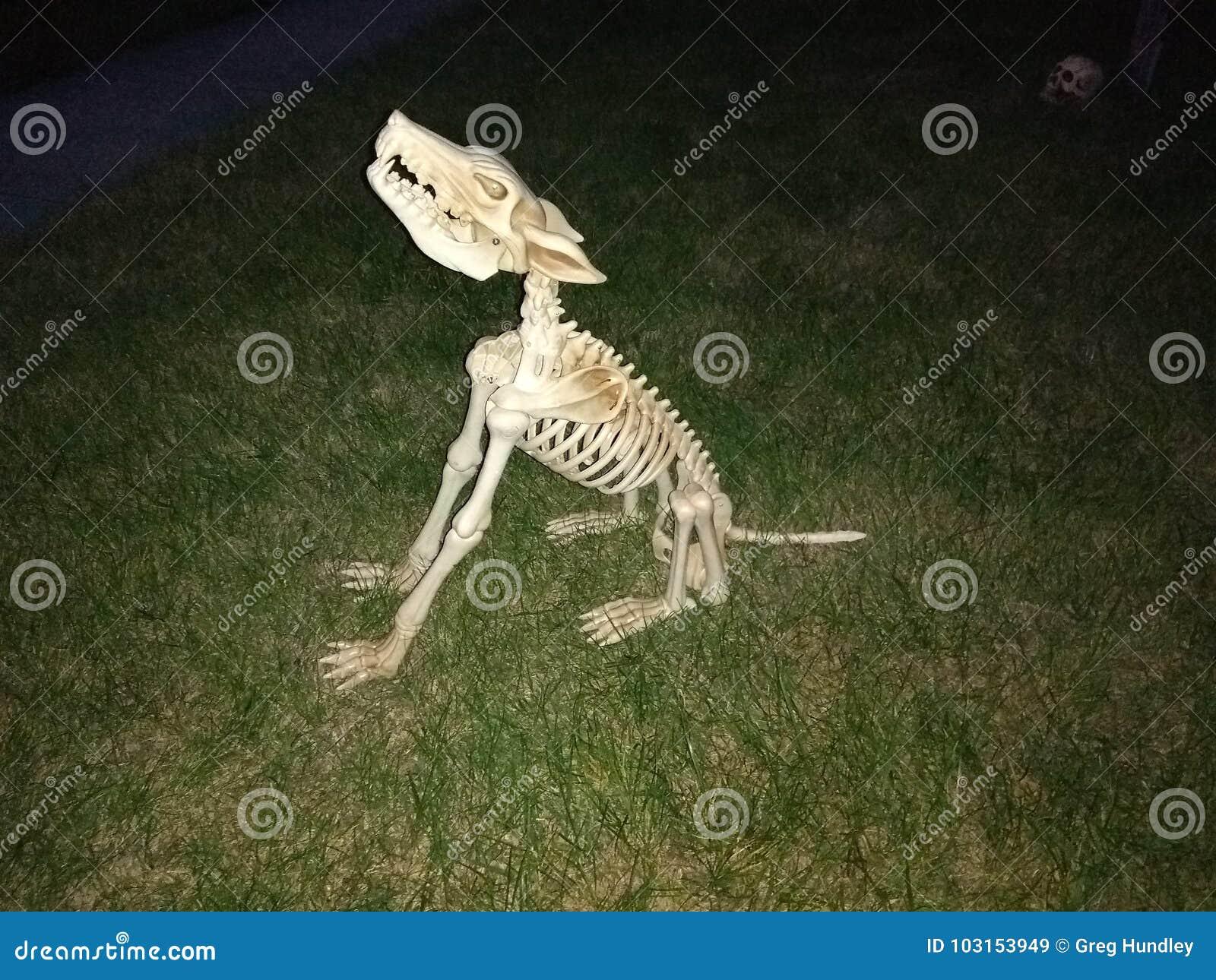 Howling Dog Skeleton Stock Image Image Of Decorations 103153949