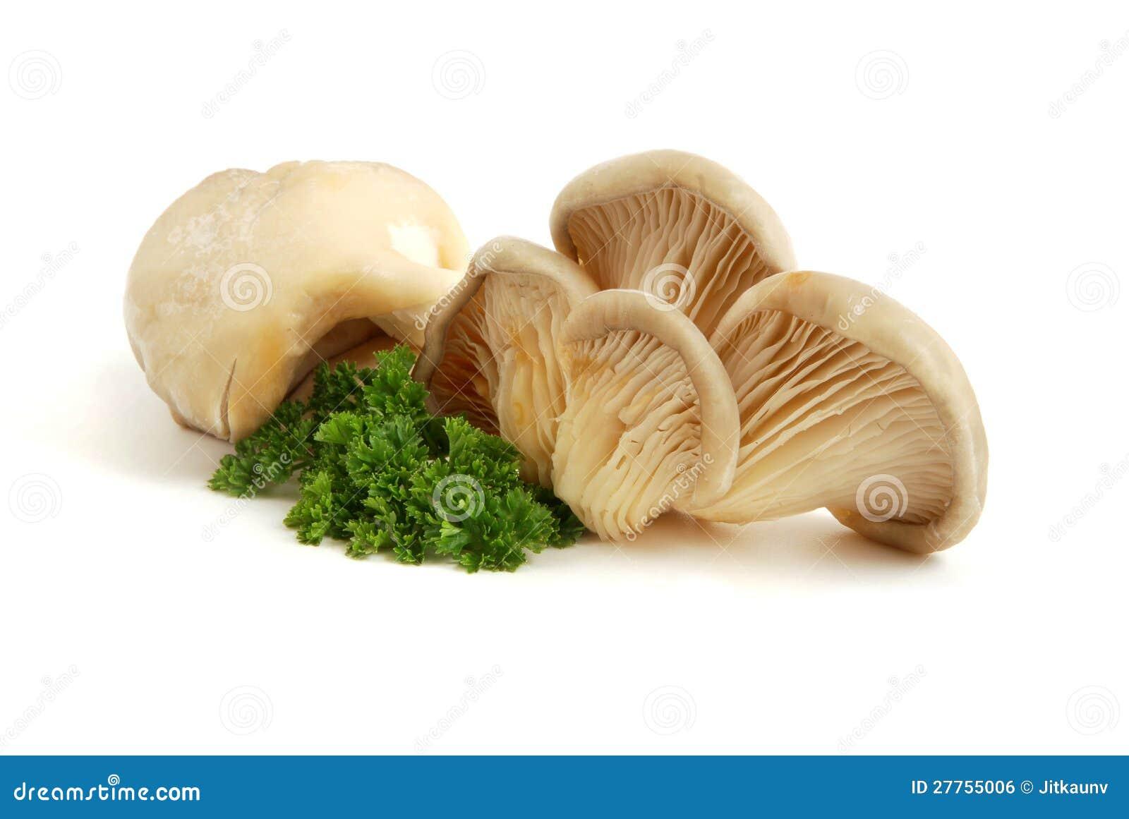 Huître de champignon de couche