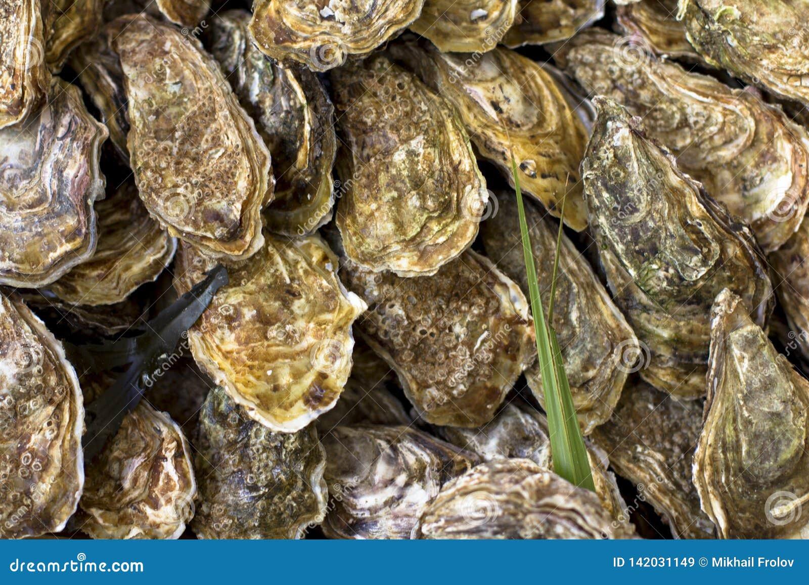 Huîtres sur le compteur dans des boîtes en bois sur le marché Huîtres à vendre au marché de fruits de mer