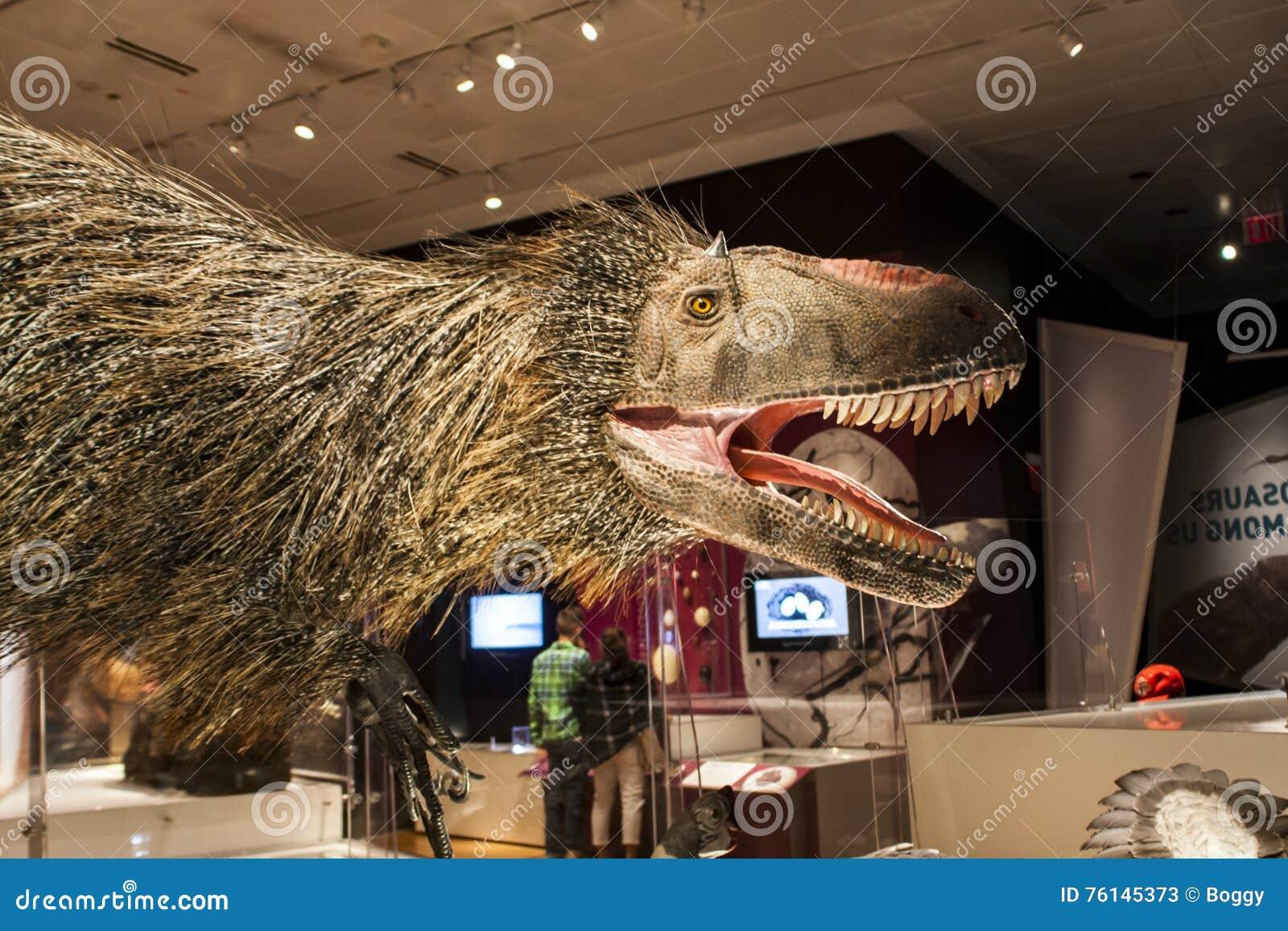 Huali de Yutyrannus en museo americano de la historia natural