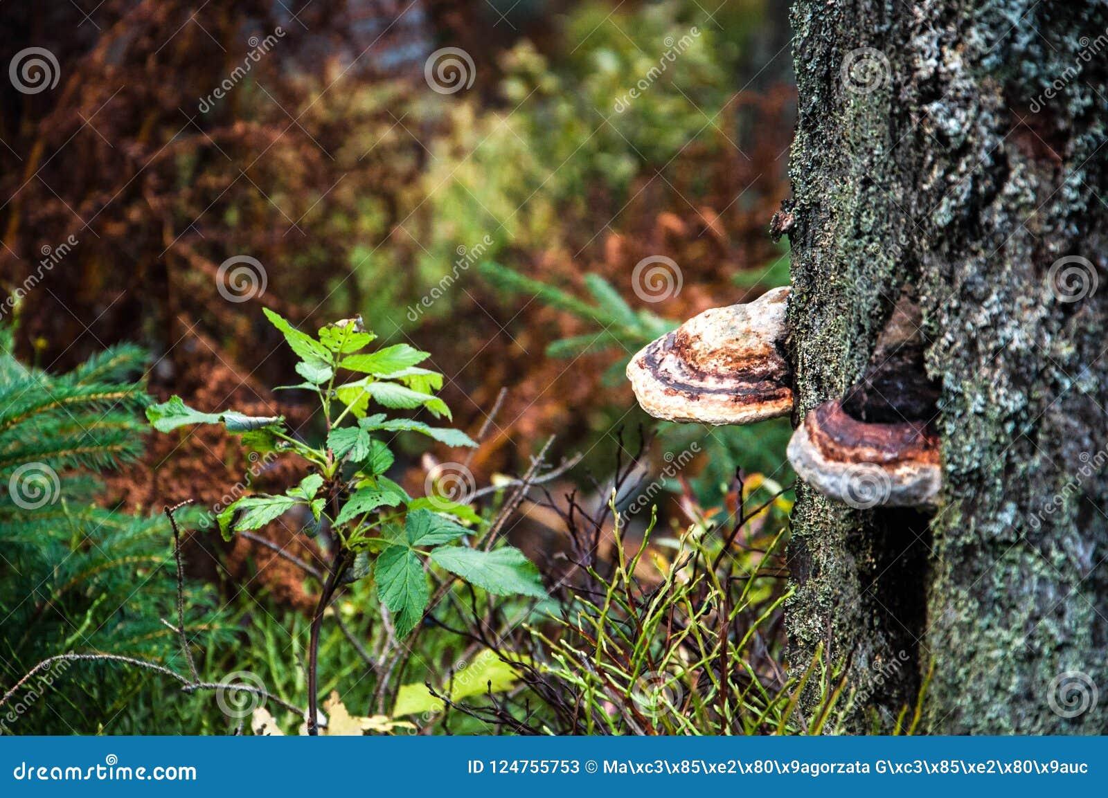 Hubs die op een boom groeien