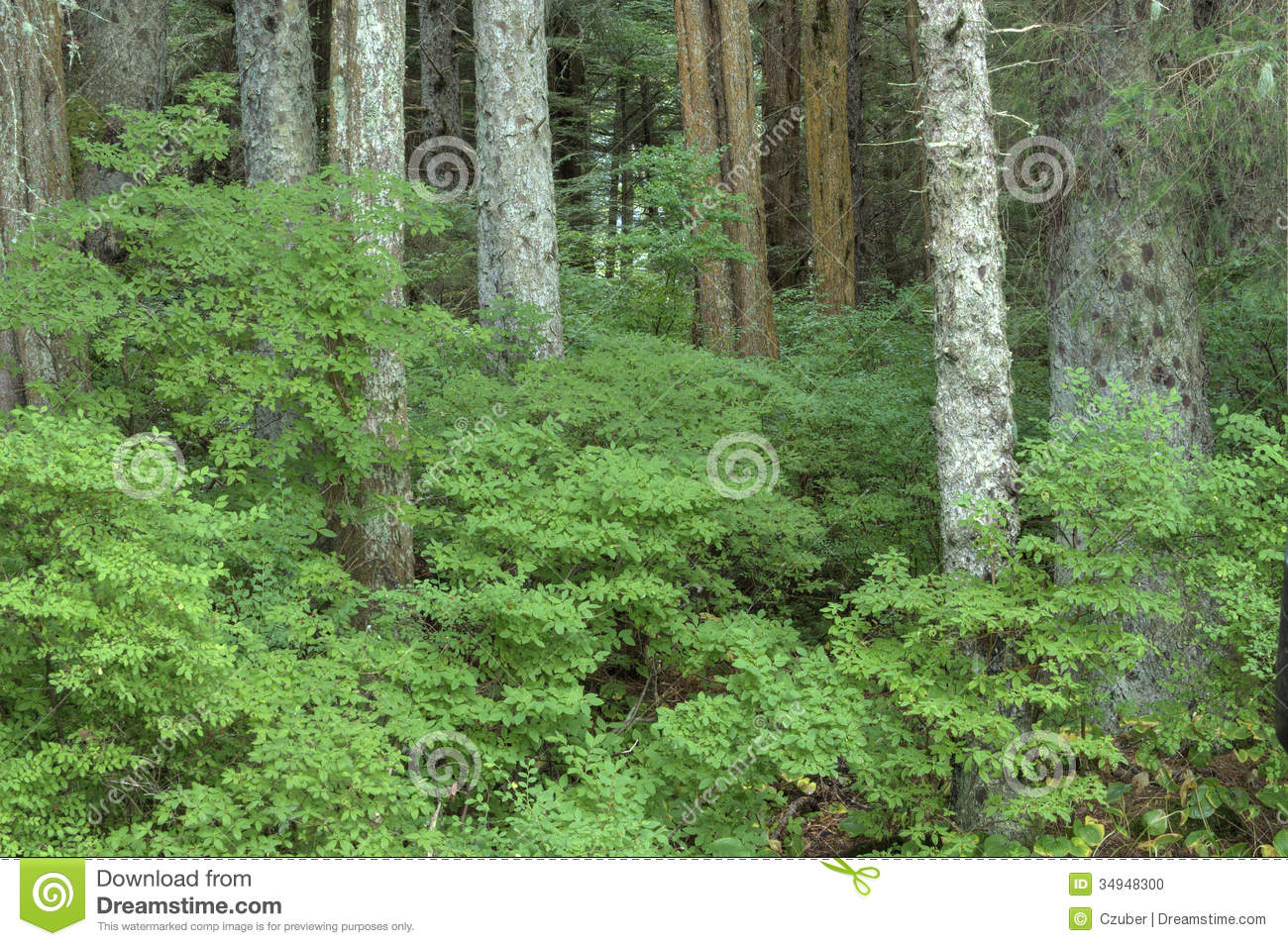 Huckleberry Bushes Stock Photo Image Of Growth Southeast