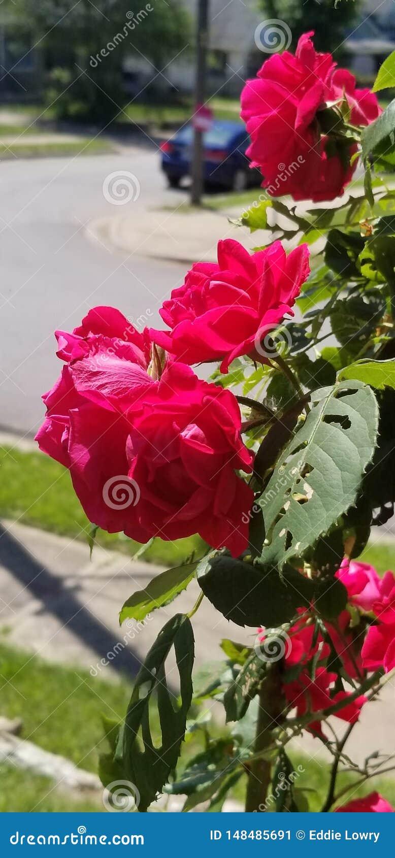 Huela las rosas