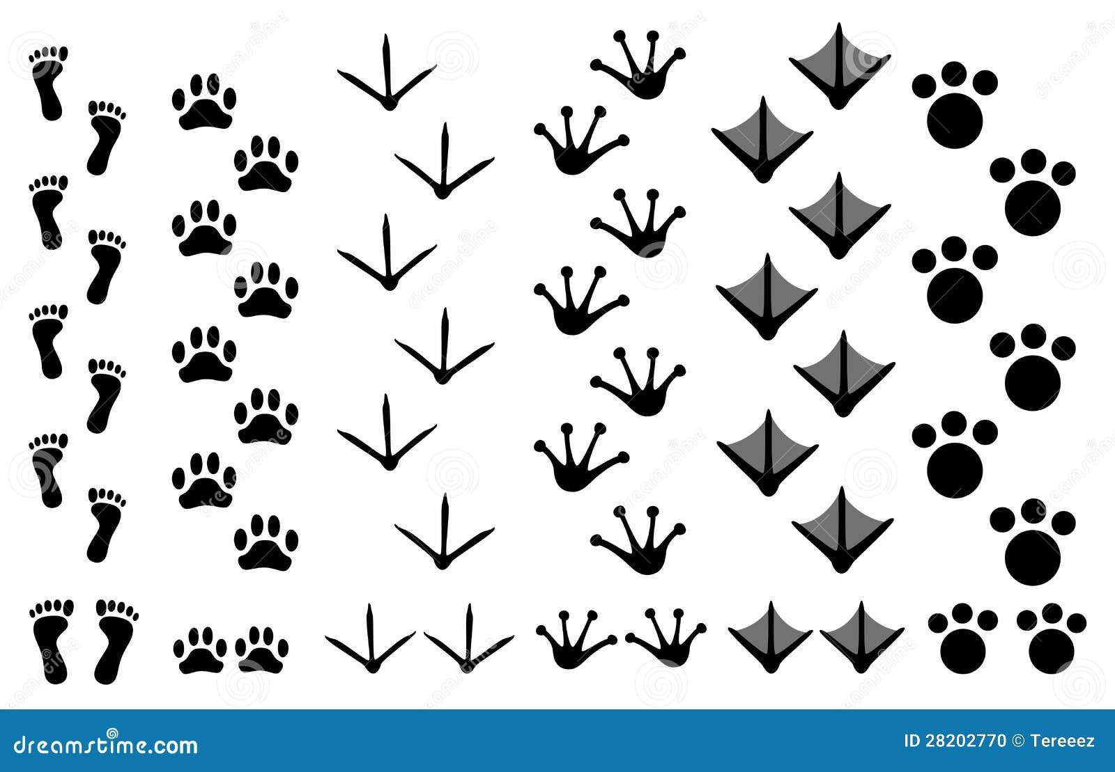 Huellas Animales Fijadas Foto de archivo - Imagen: 28202770 African Lion Footprints