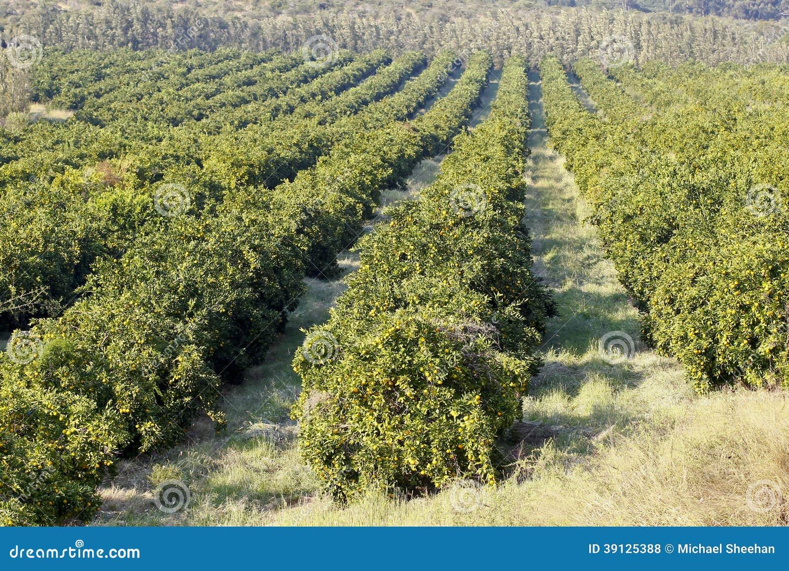 Huerta de fruta