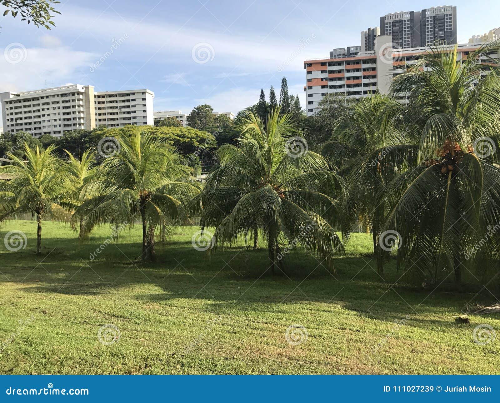 Huerta del coco en una urbanización