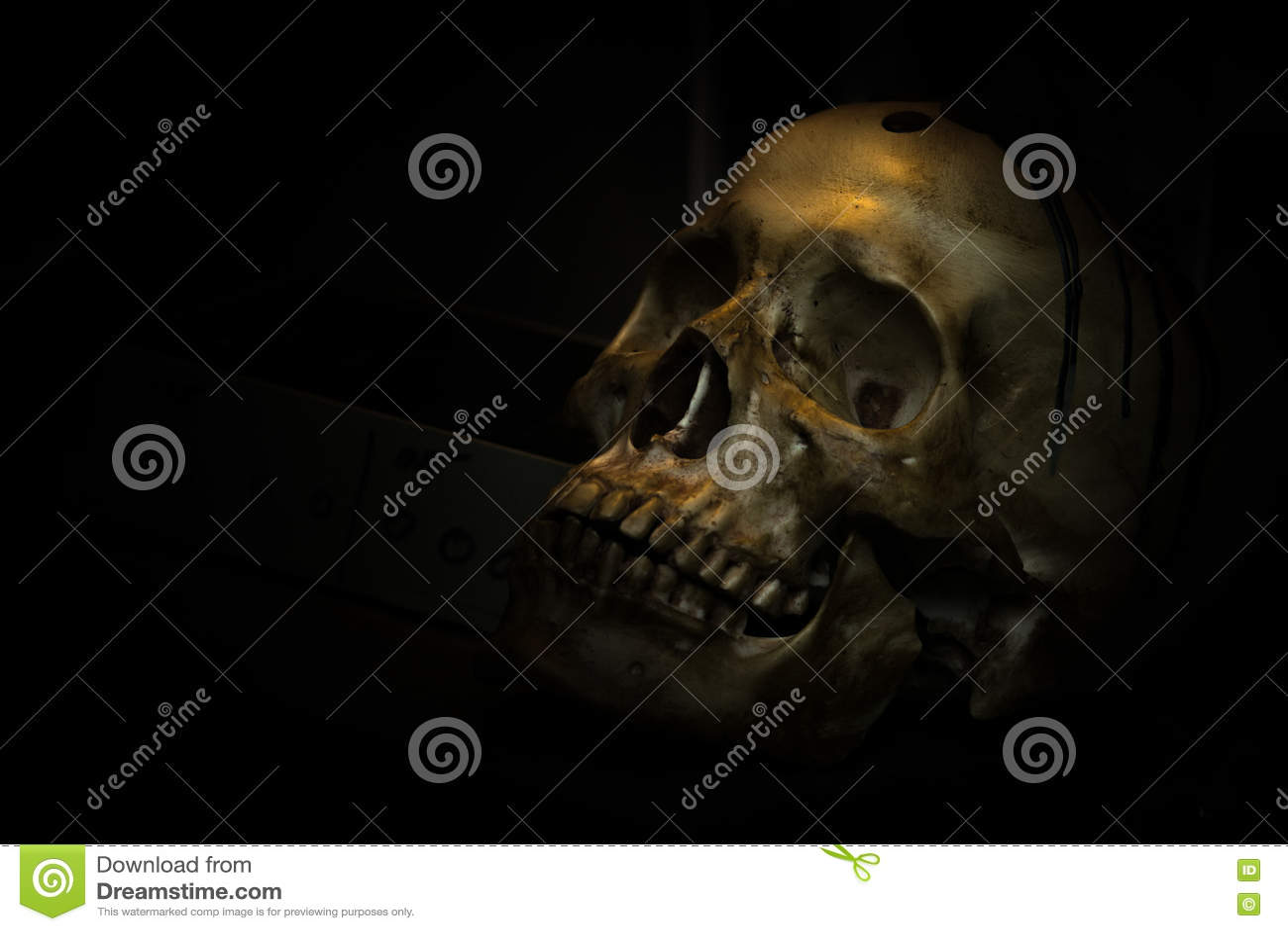 Hueso Del Cráneo En Cuarto Oscuro Foto de archivo - Imagen de ...