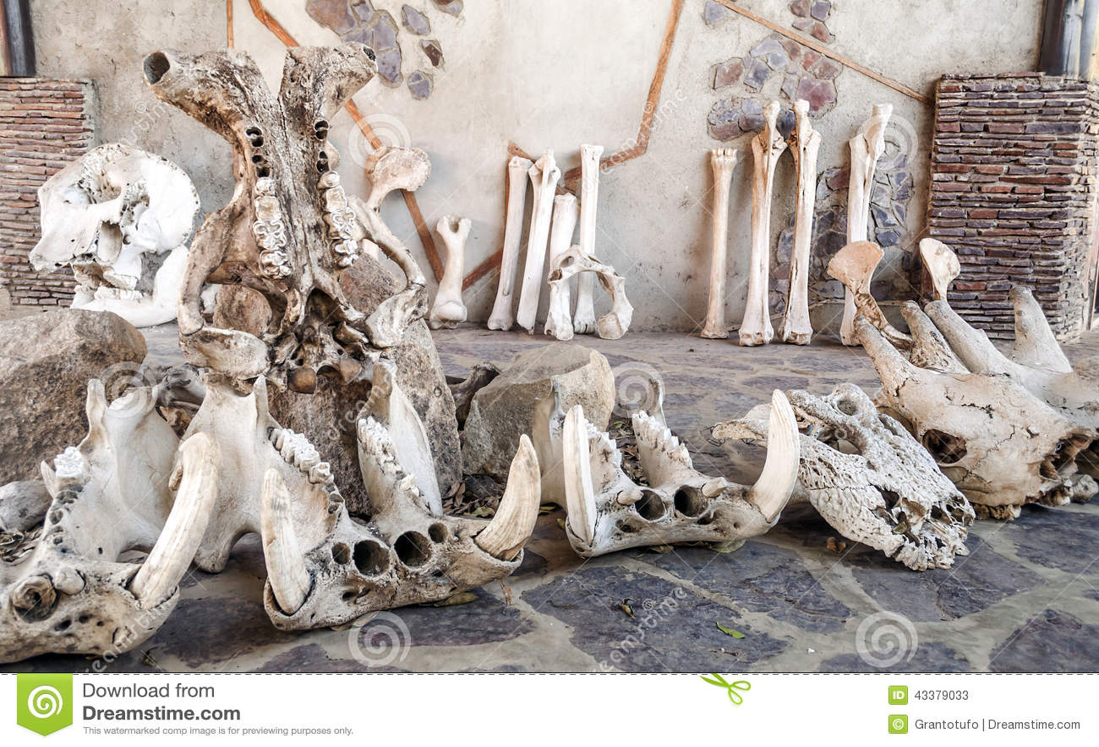 Huesos De Animales